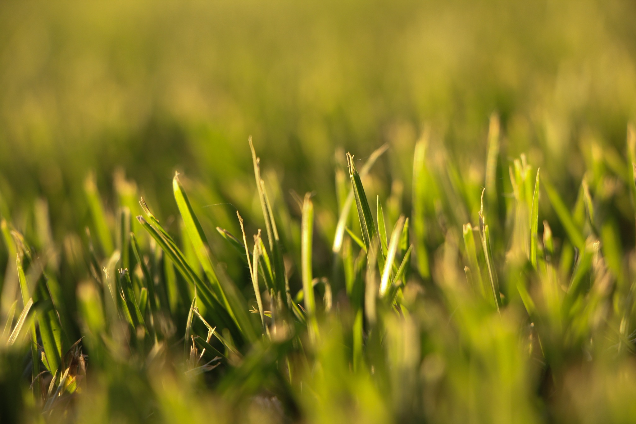 Grass  by Scapes By Jana