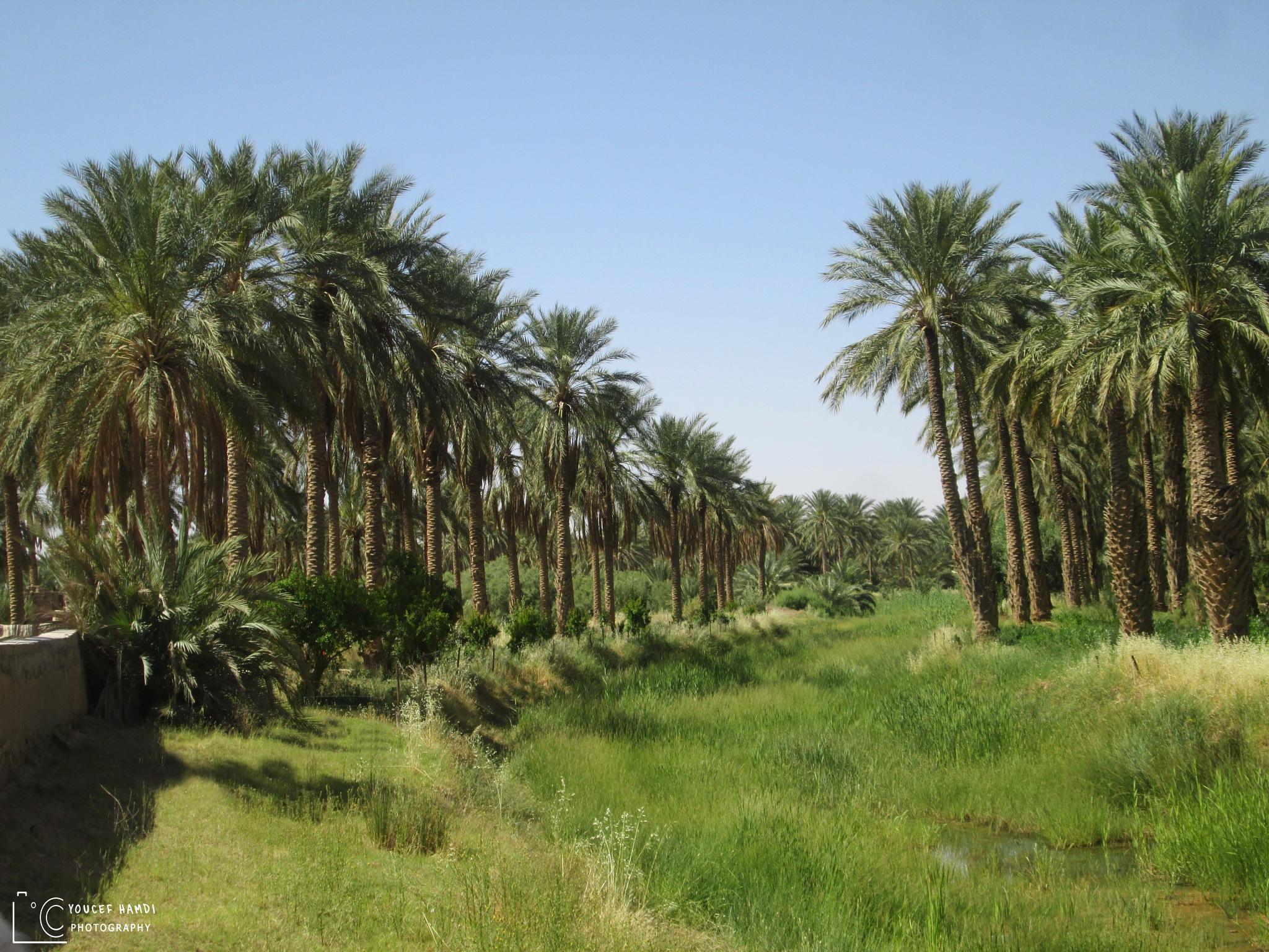 The oases of the Algerian desert  by Youcef Hamdi