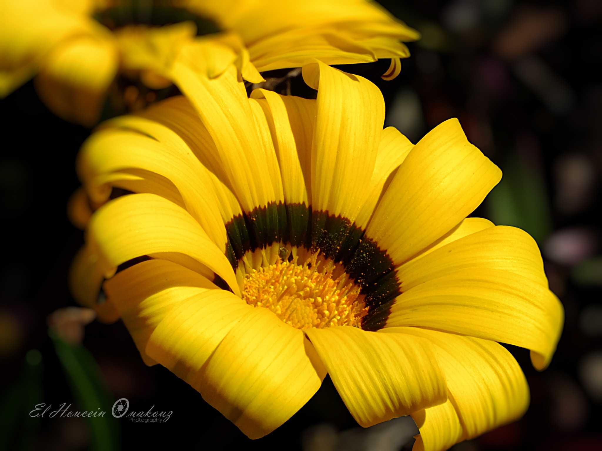Yellow flower by El Houcein Ouakouz