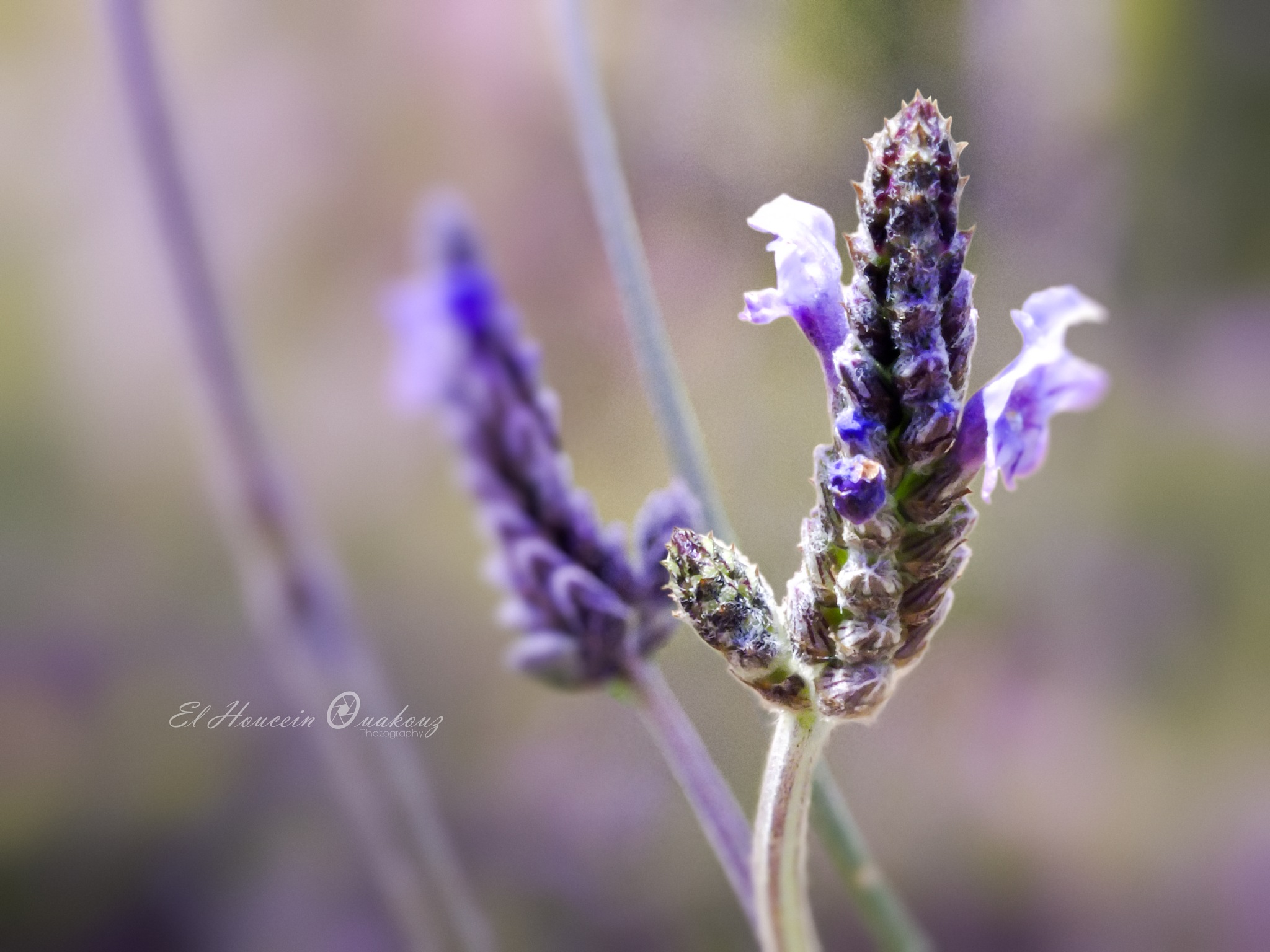 Flowers by El Houcein Ouakouz