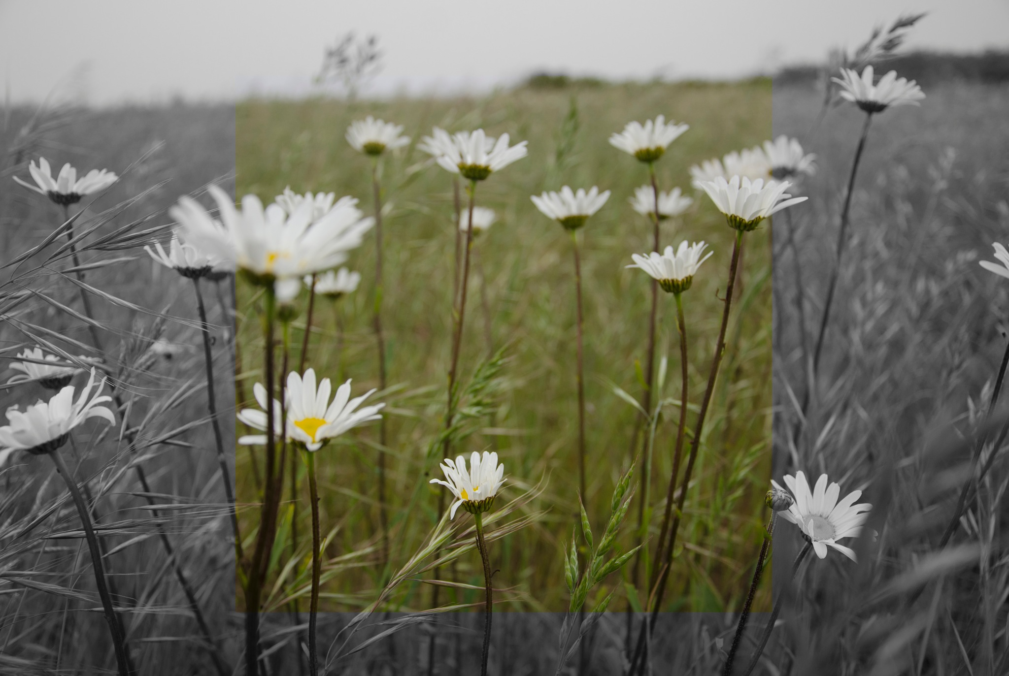 Wild flowers (reworked) by ChrisBowers