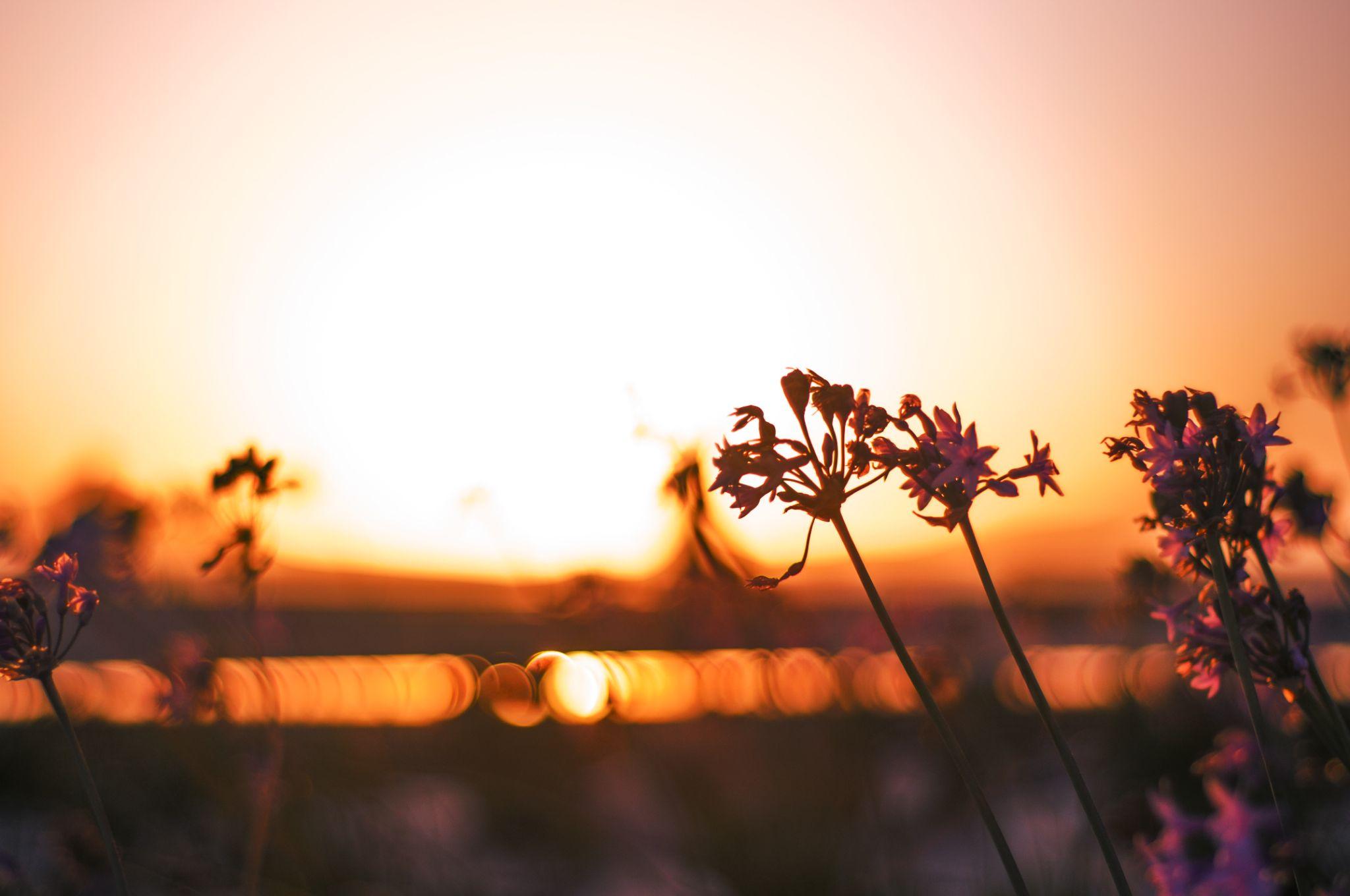 Sunset in Mogador by Tariq Ouhti