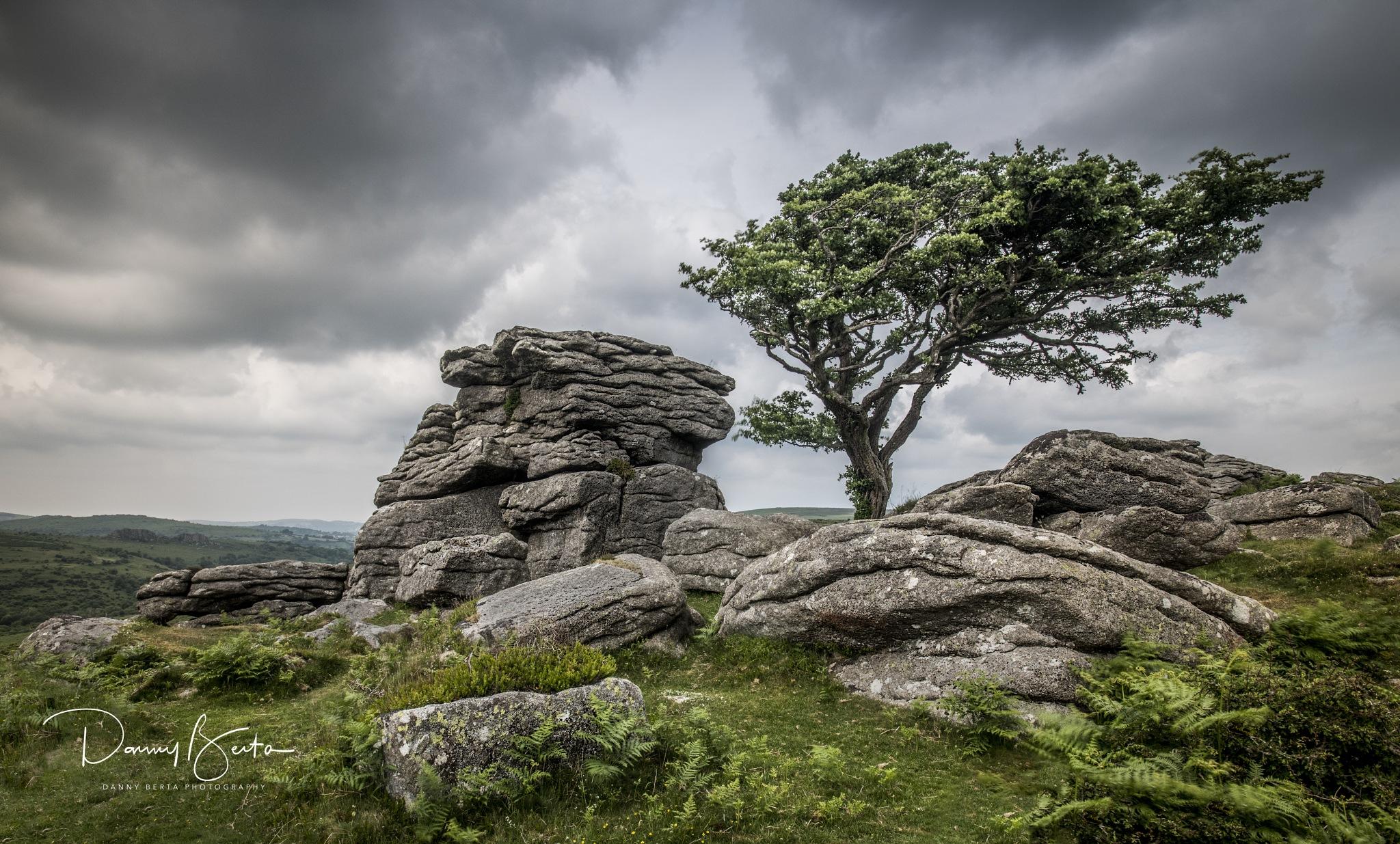 The Tree - Dartmoor by Danny Berta