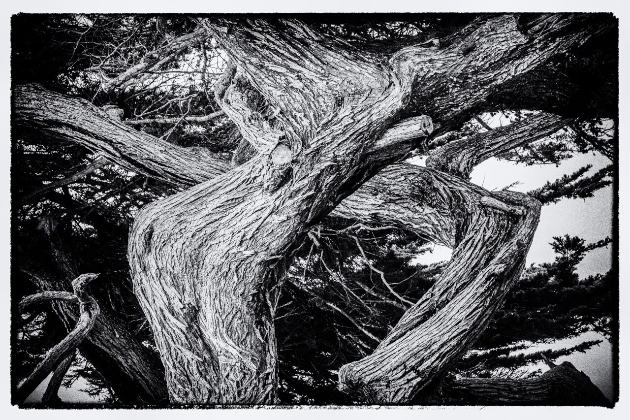 Another View of Twisted  Cypress by bwh2017