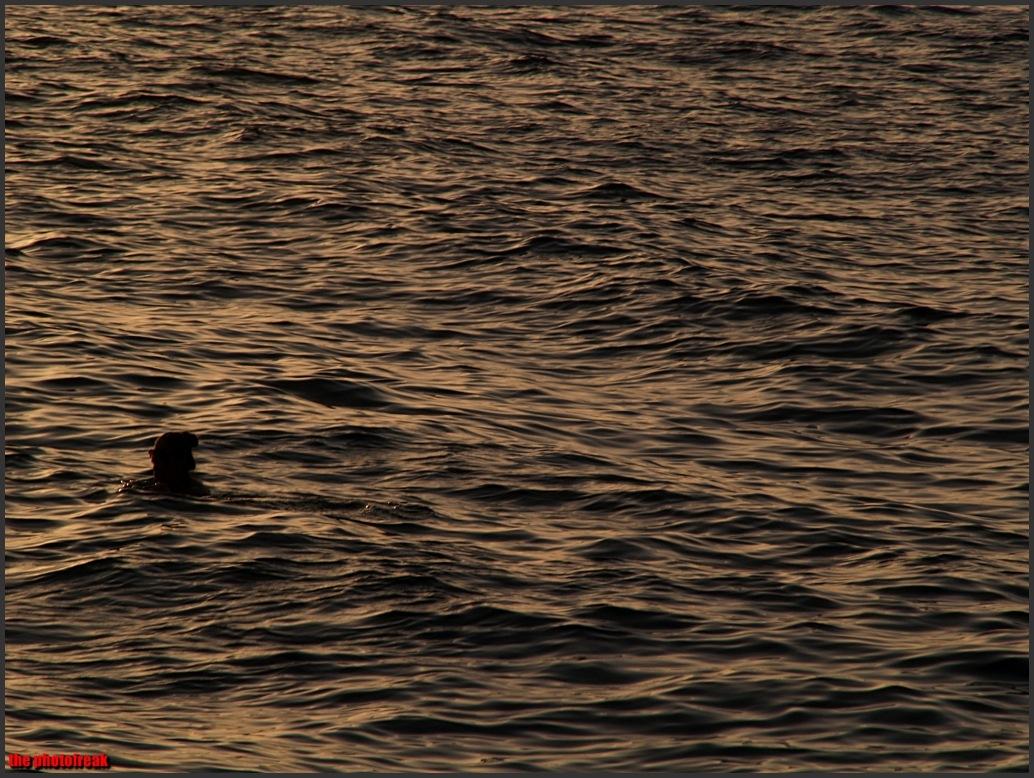 in the sunset by harrythephotofreak