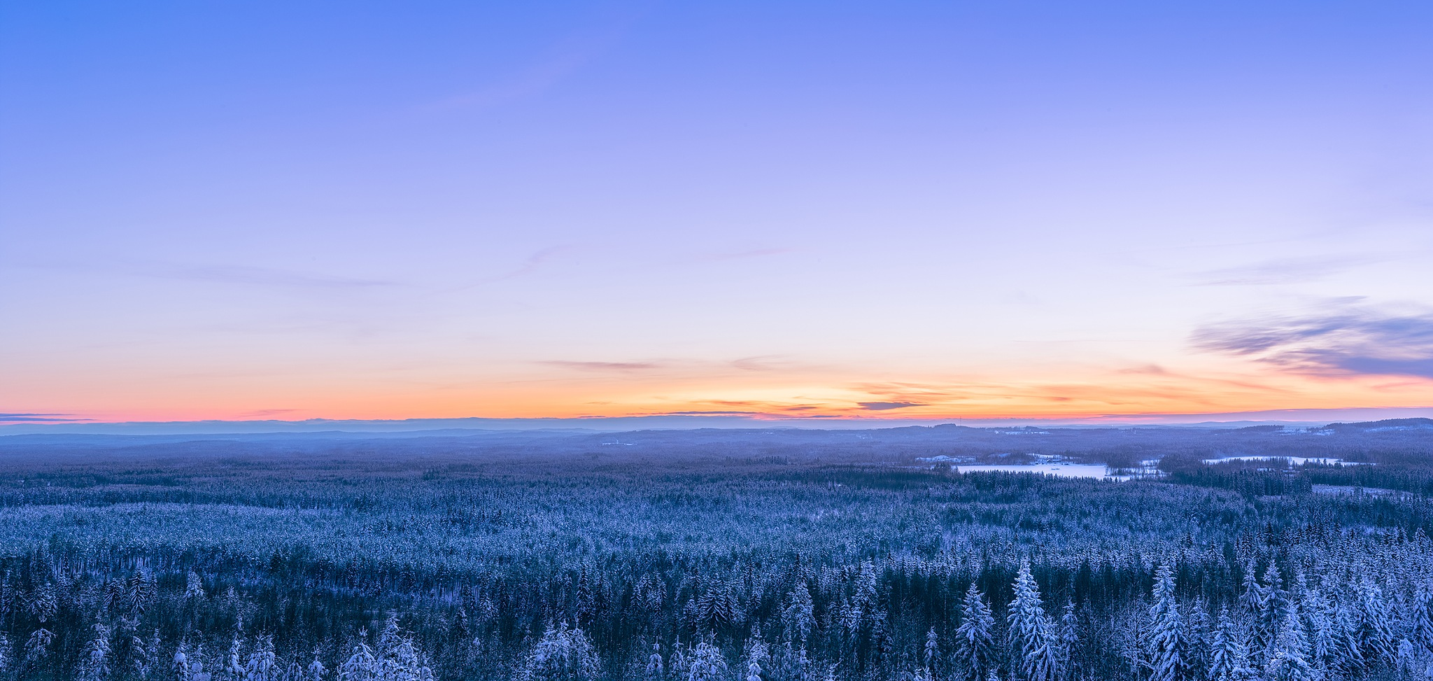 Those cold woods by Harri Saastamoinen