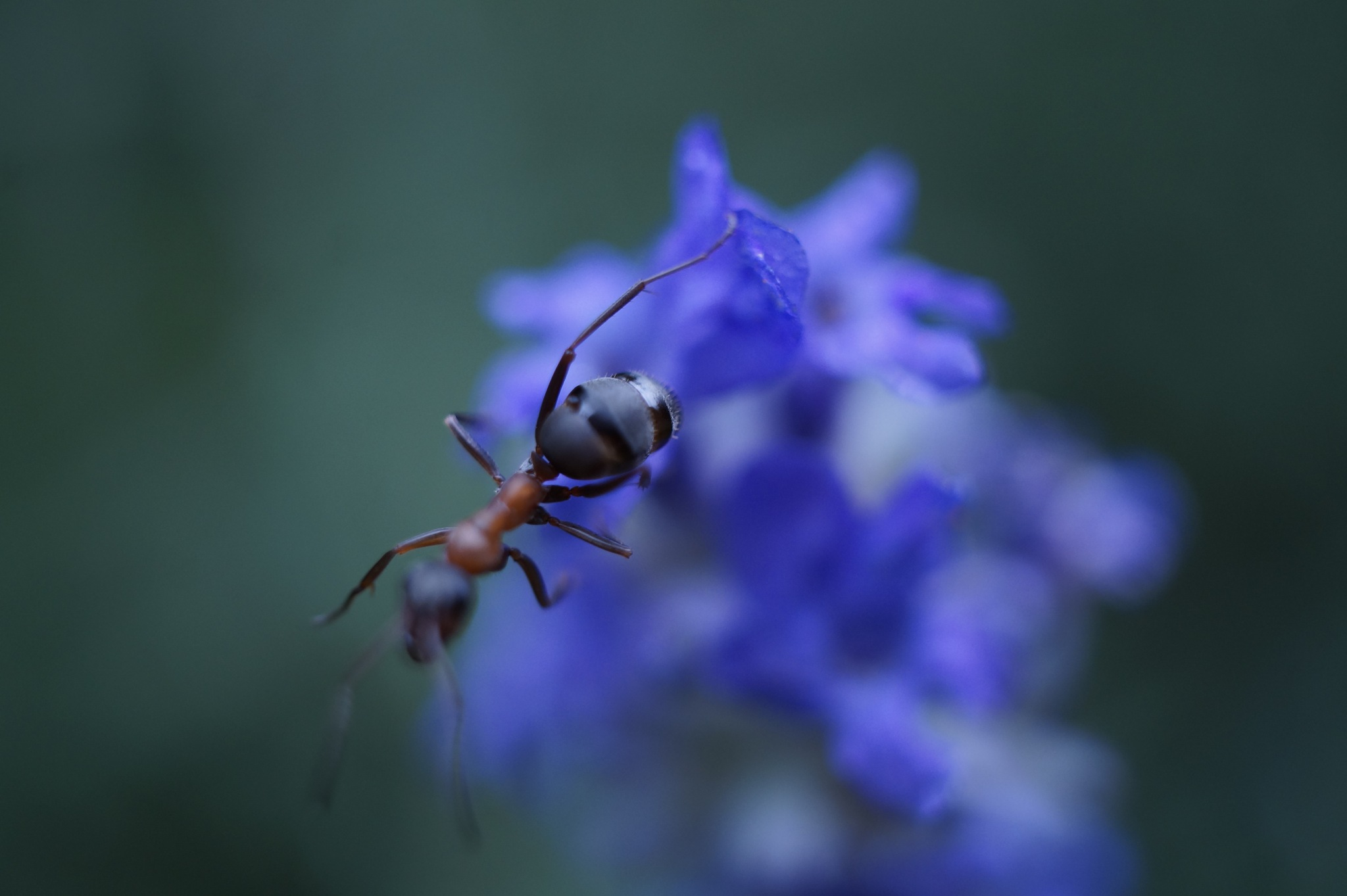 ant by Burak Demir