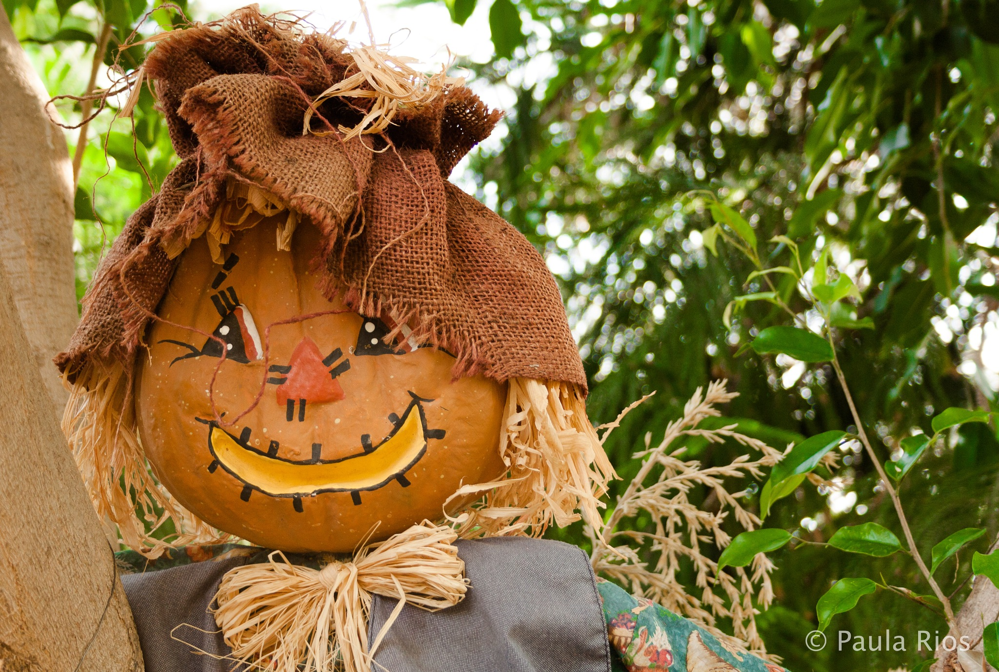 Scarecrow in the garden by Paula Alejandra