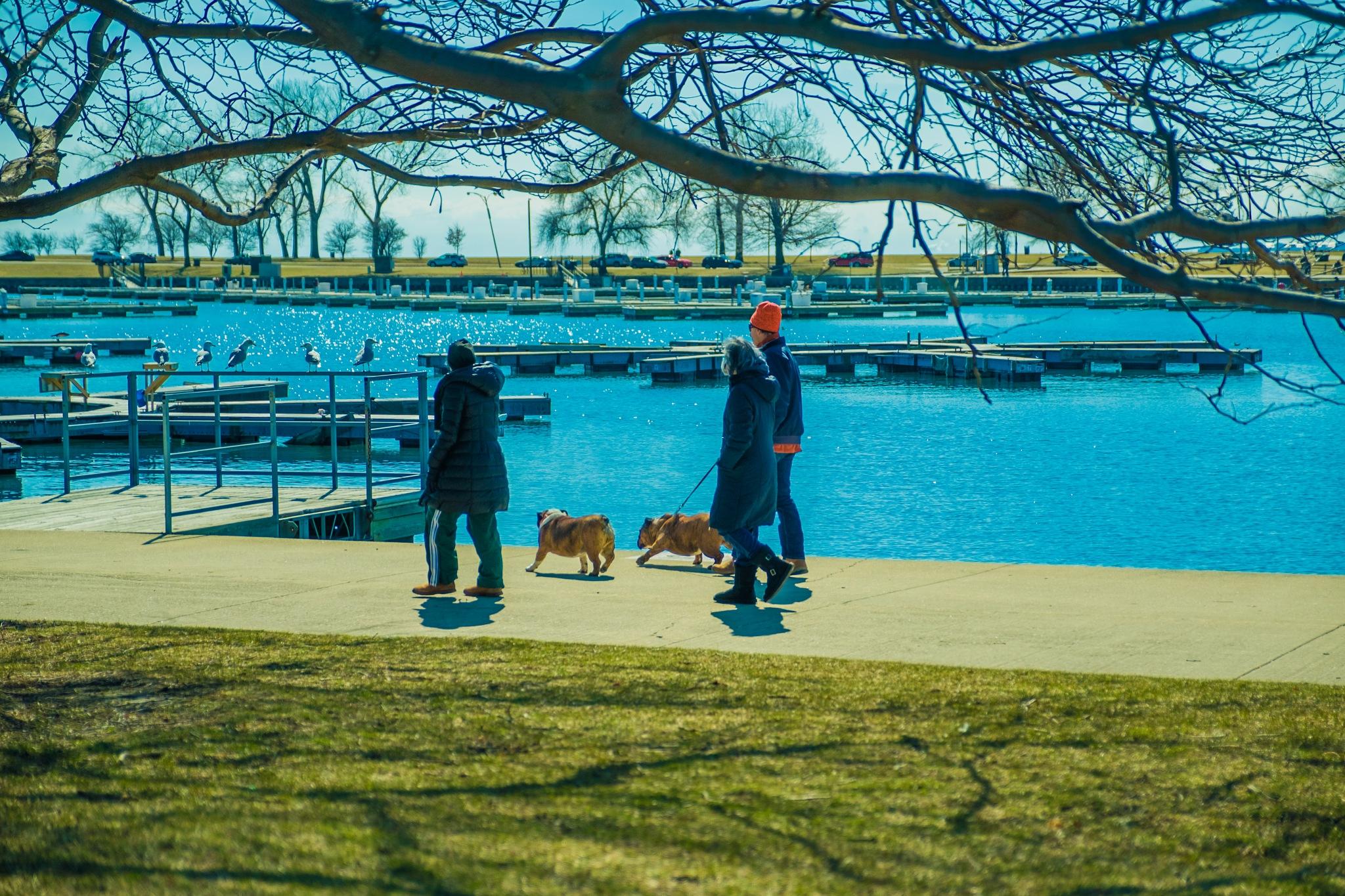 dogs walking by KarimMaataoui