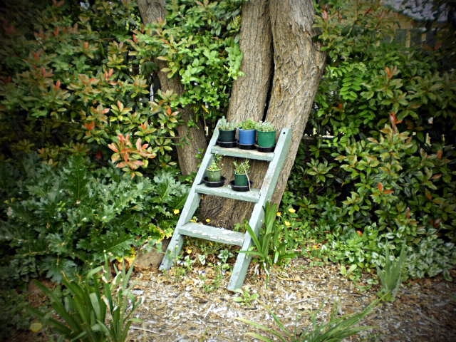'LADDER AGAINST A TREE' by  Dianne J. Larsen