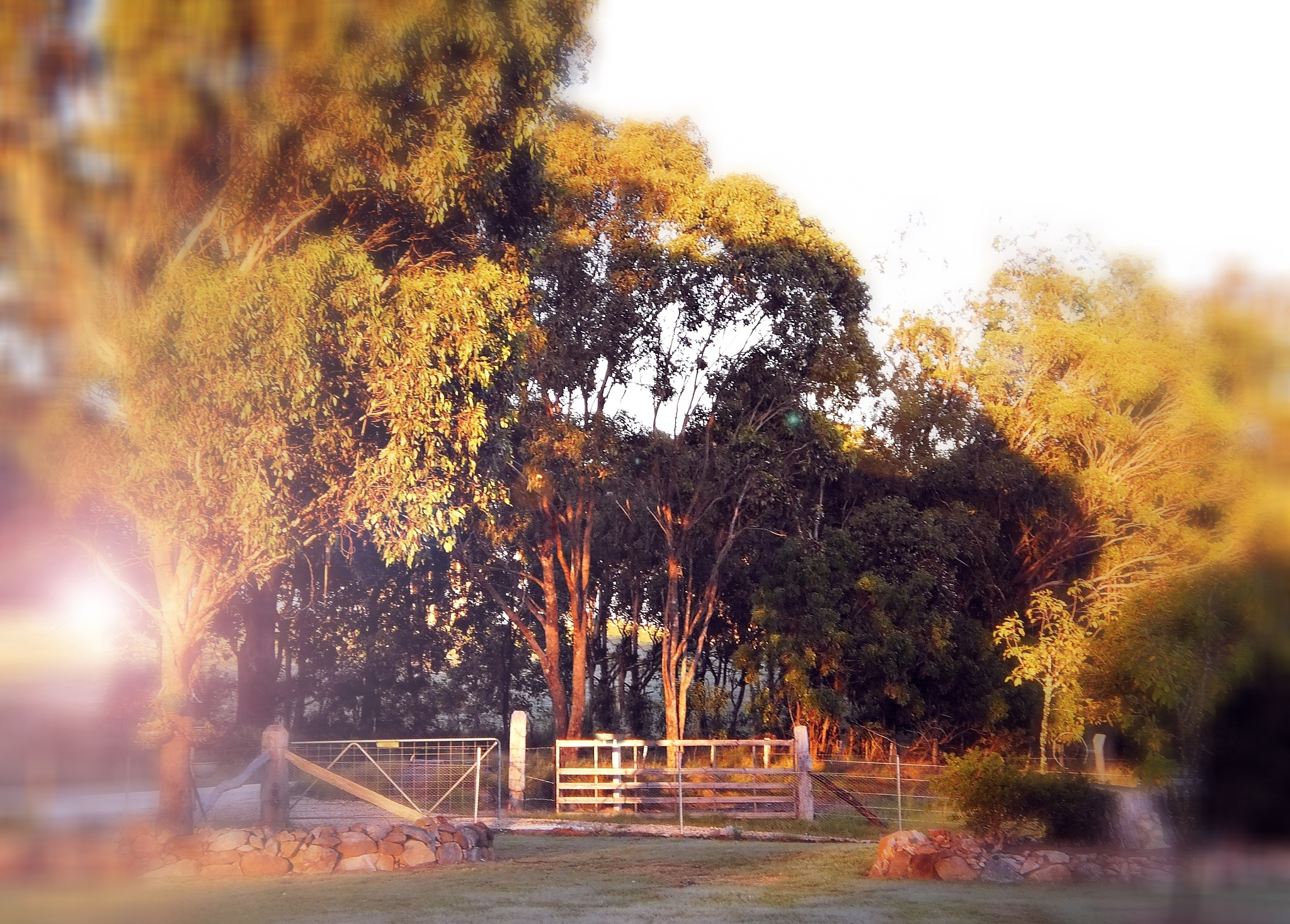 A GOLDEN MORNING by  Dianne J. Larsen