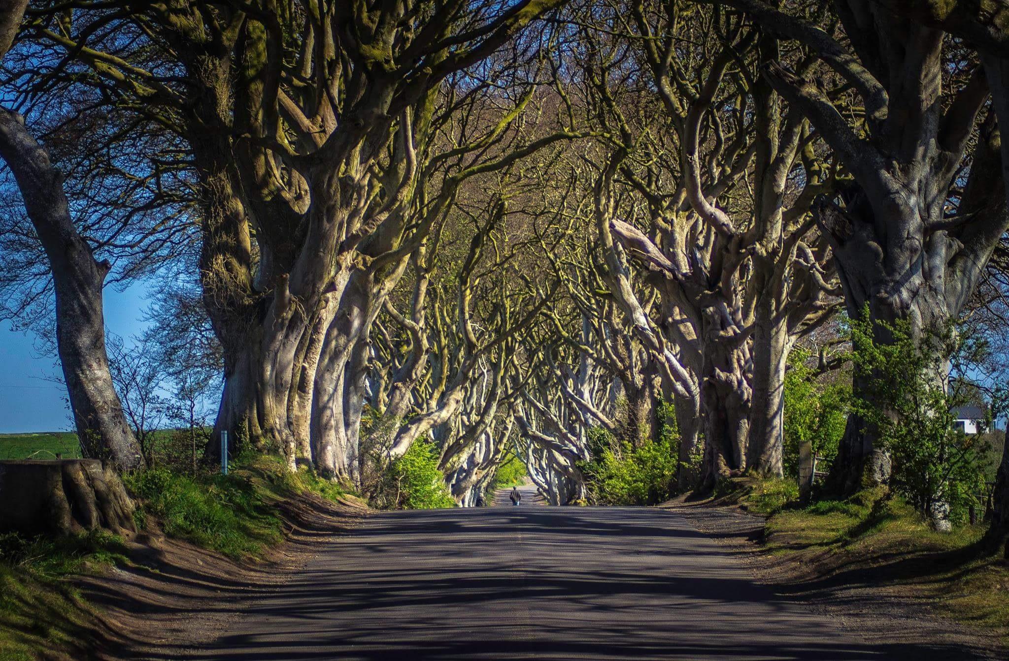 Ireland  by heston kelly