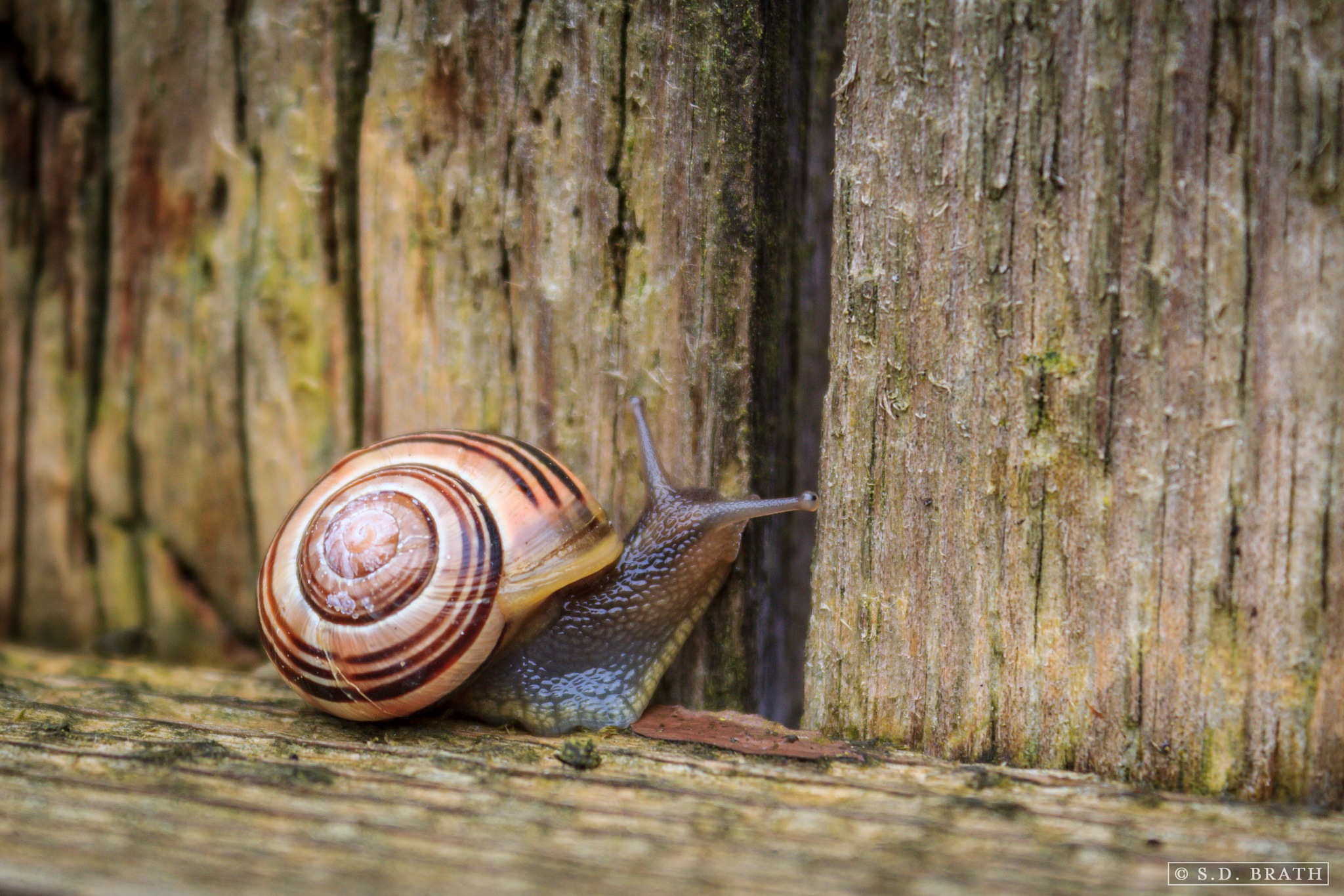 Snail's Pace by S. D. Brath