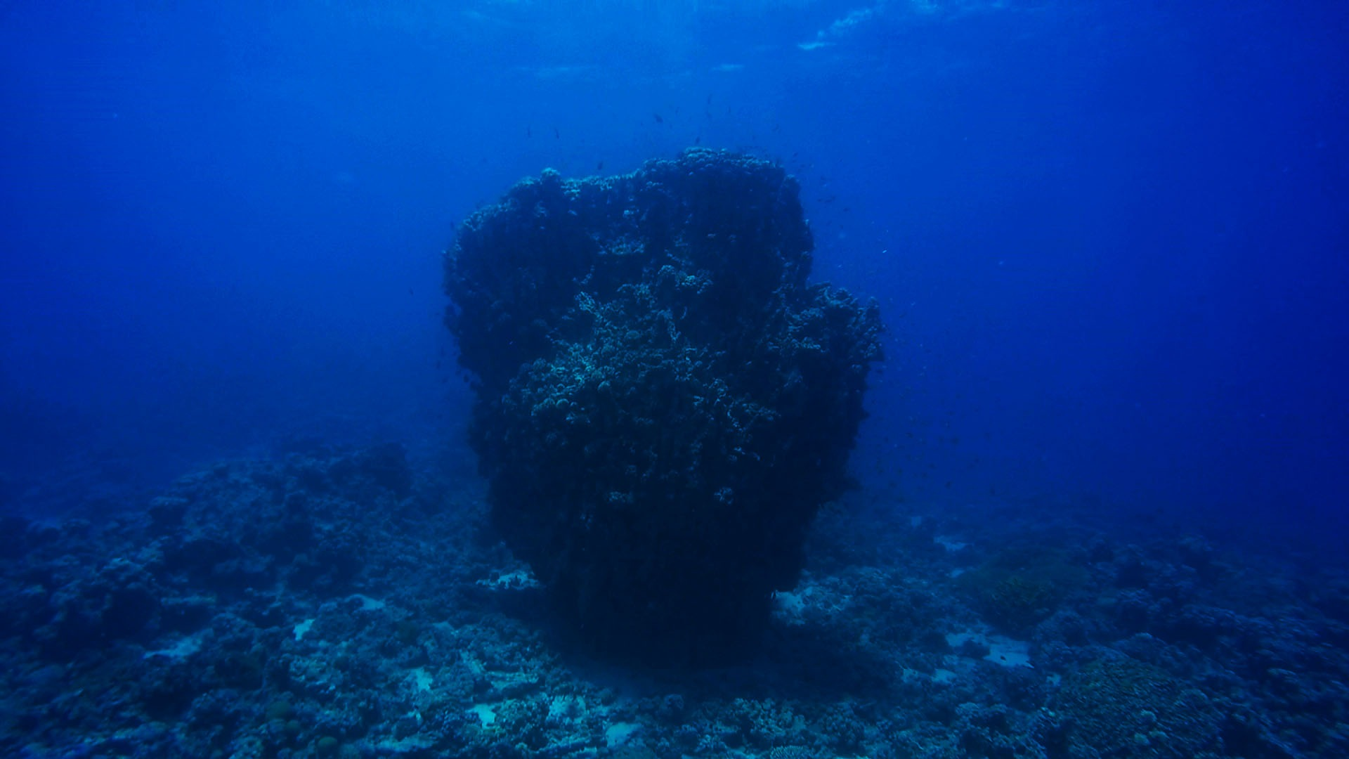 The great reef rock by Hassan Alkadi