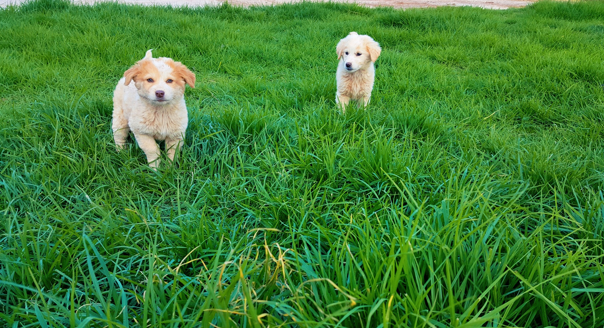 Cute Dogs  by zakaria sadouni