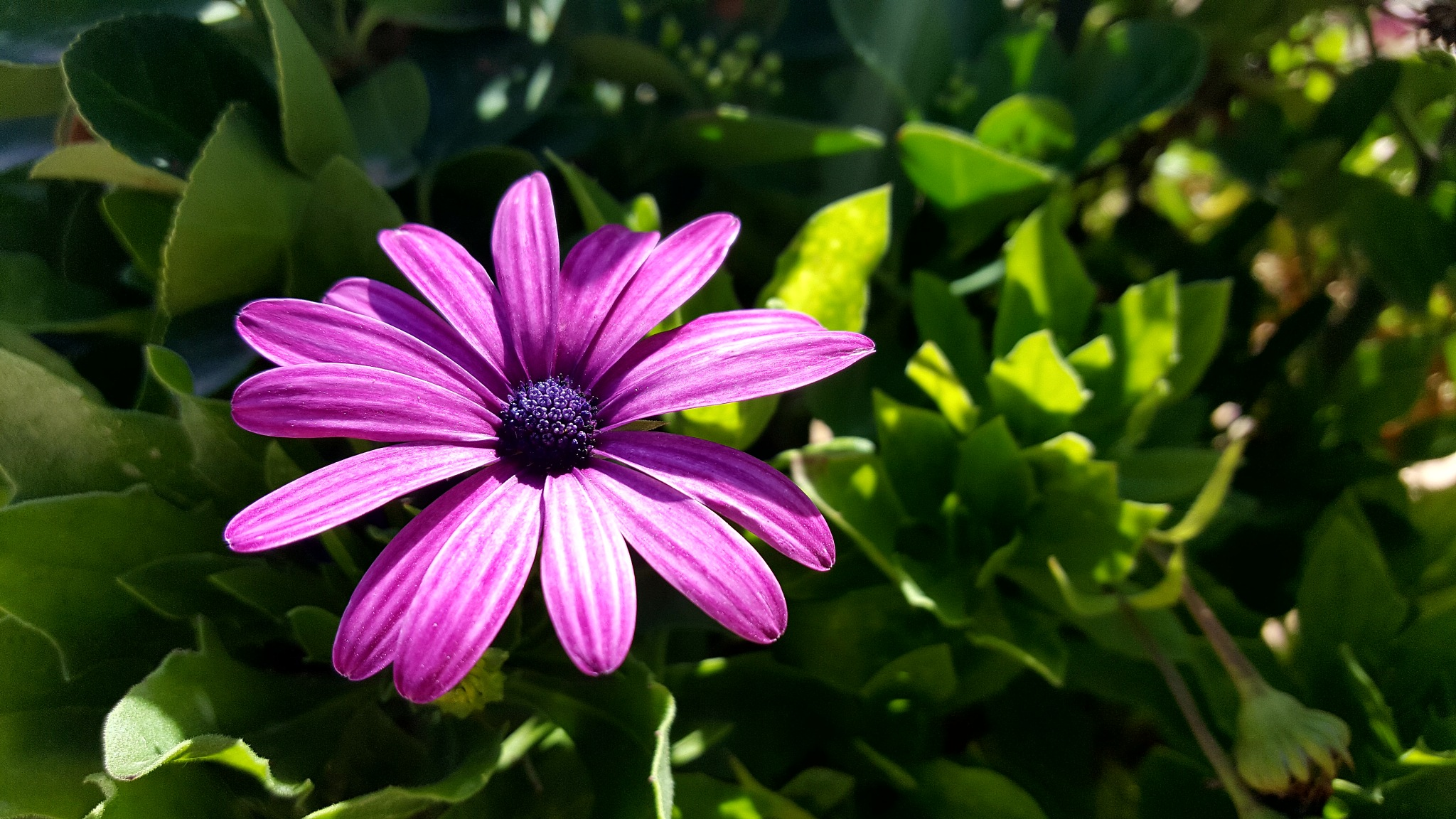 flowers by zakaria sadouni