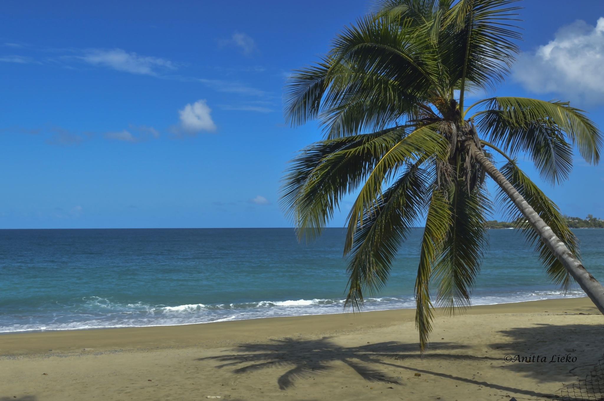 Tobago by Anitta Lieko
