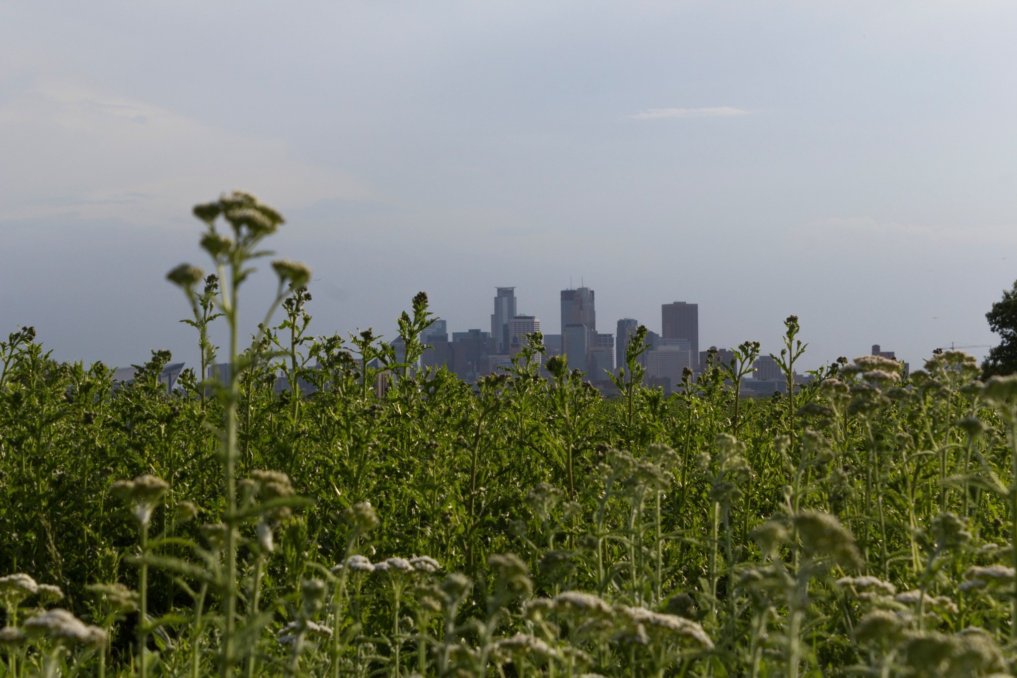 minneapolis from the northeast by Carson Kaskel