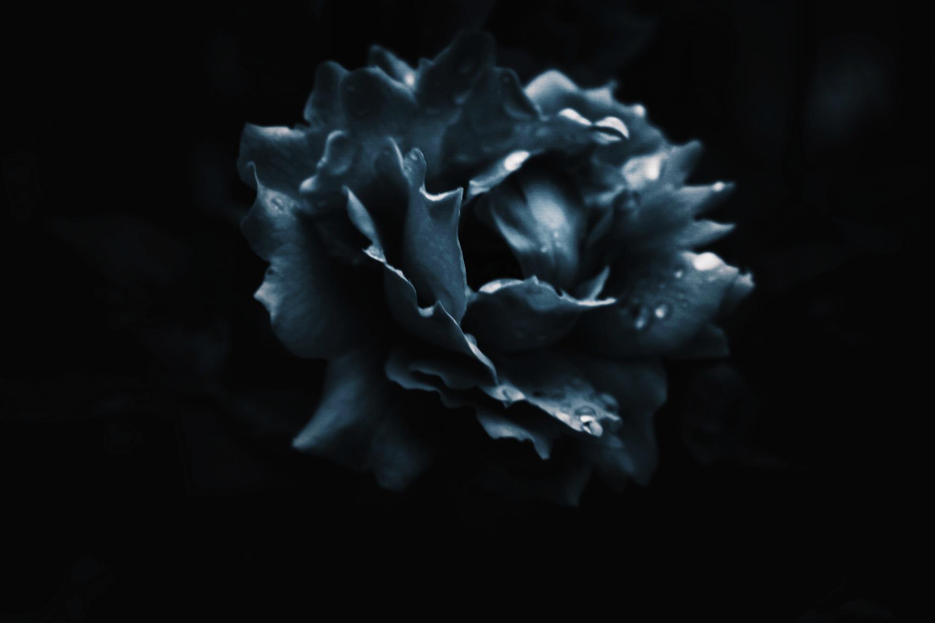 Blue by Maria Berggren