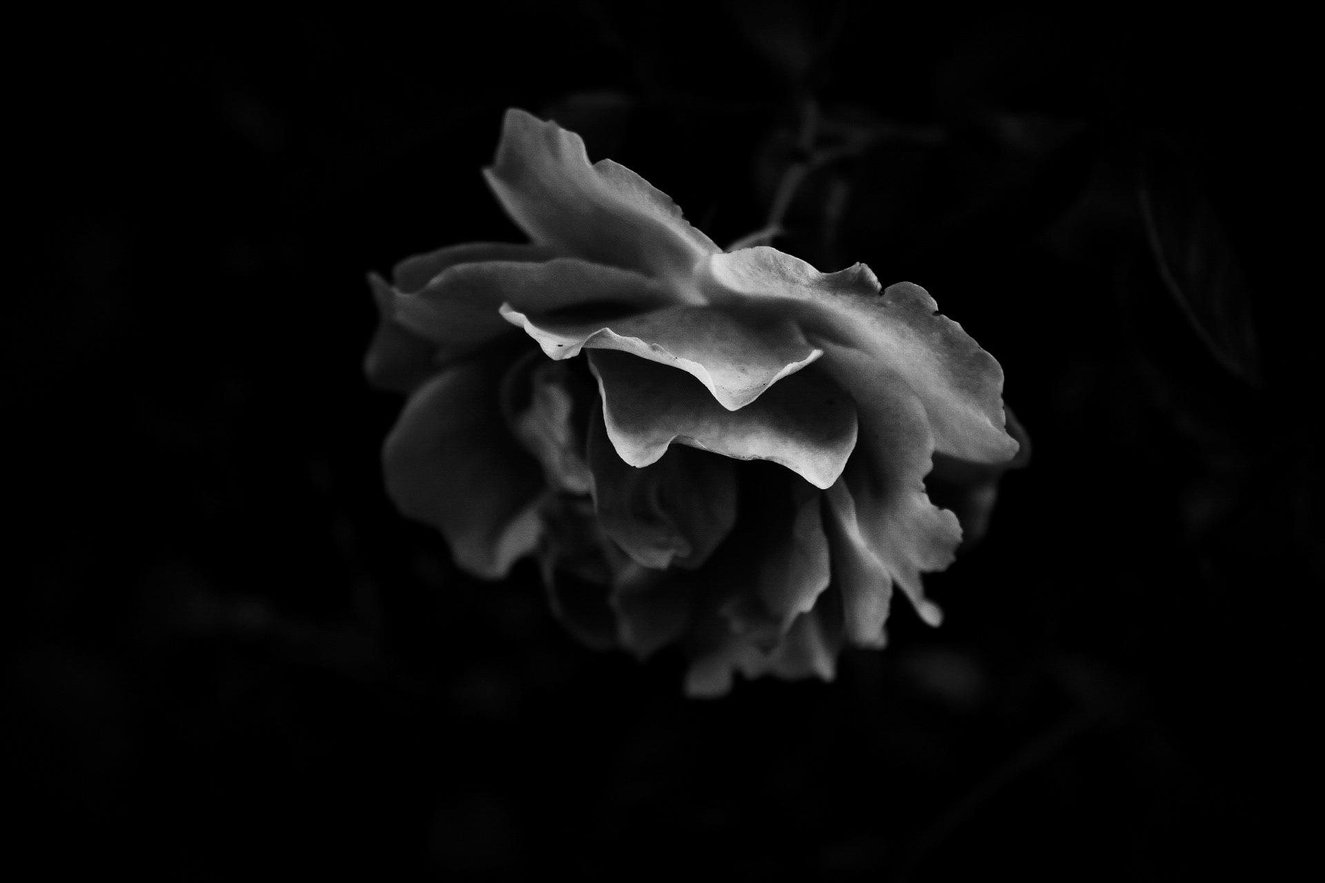 Light  by Maria Berggren