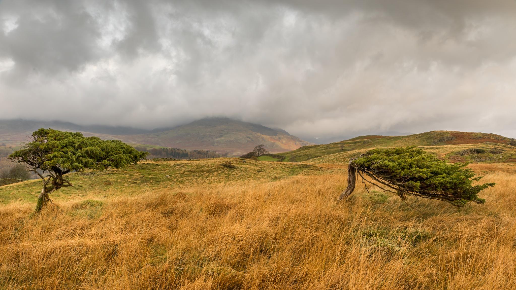 Wind-blown by Stephen Hammond