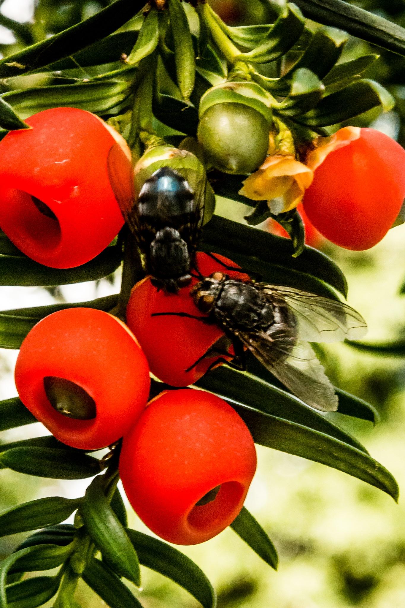 I wonder what flies talk about???! by Stephen Hammond