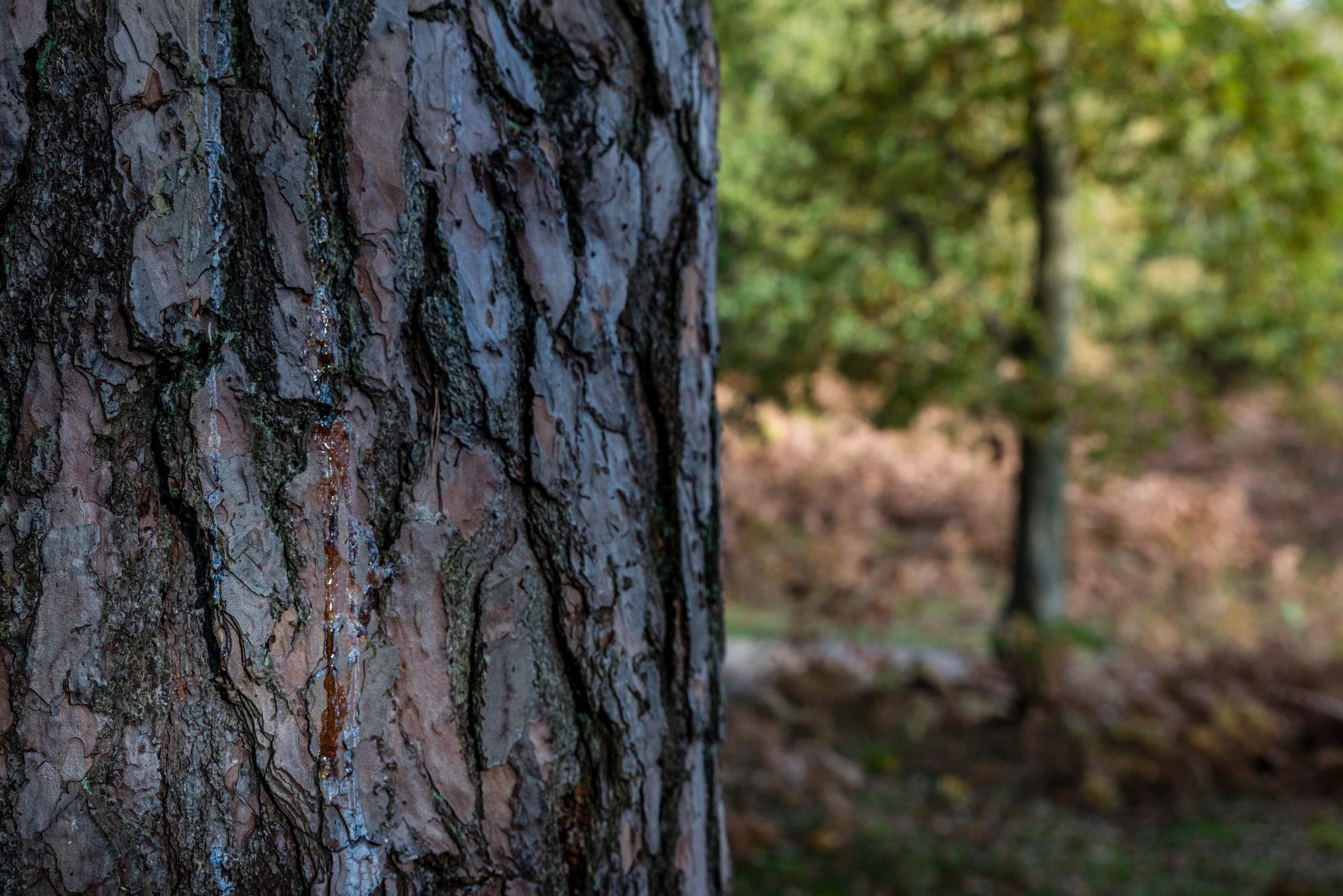 Weeping tree by Stephen Hammond