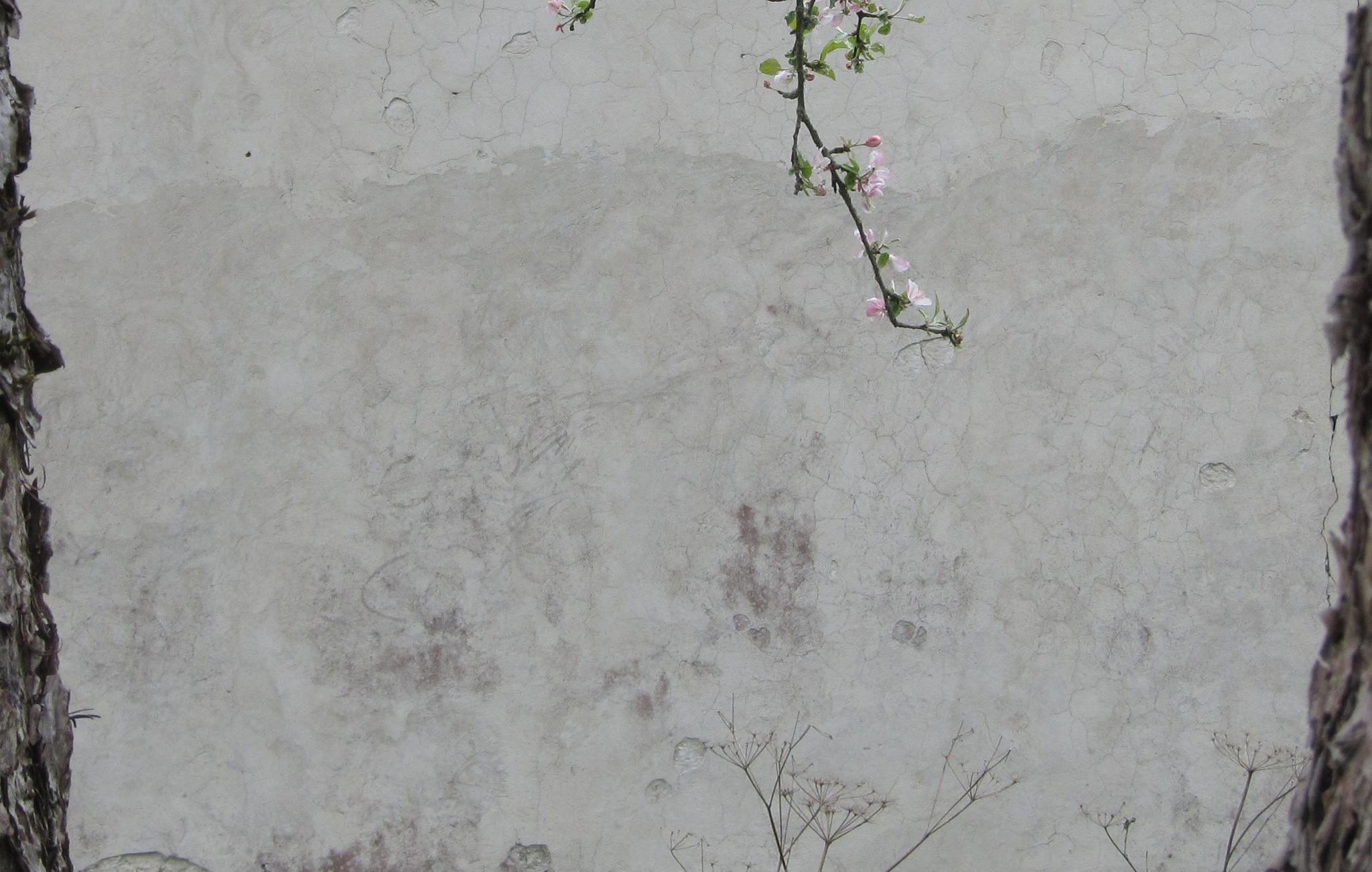at apple-blossom-o'clock by anulumesadu