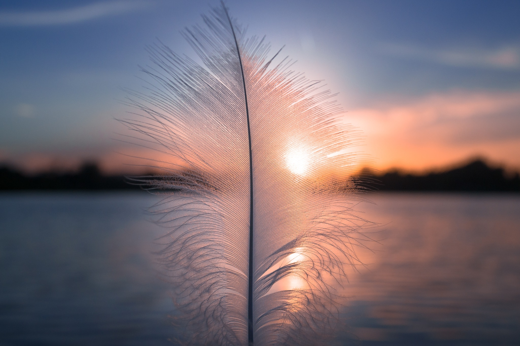 Sunny Feather by AK Photography