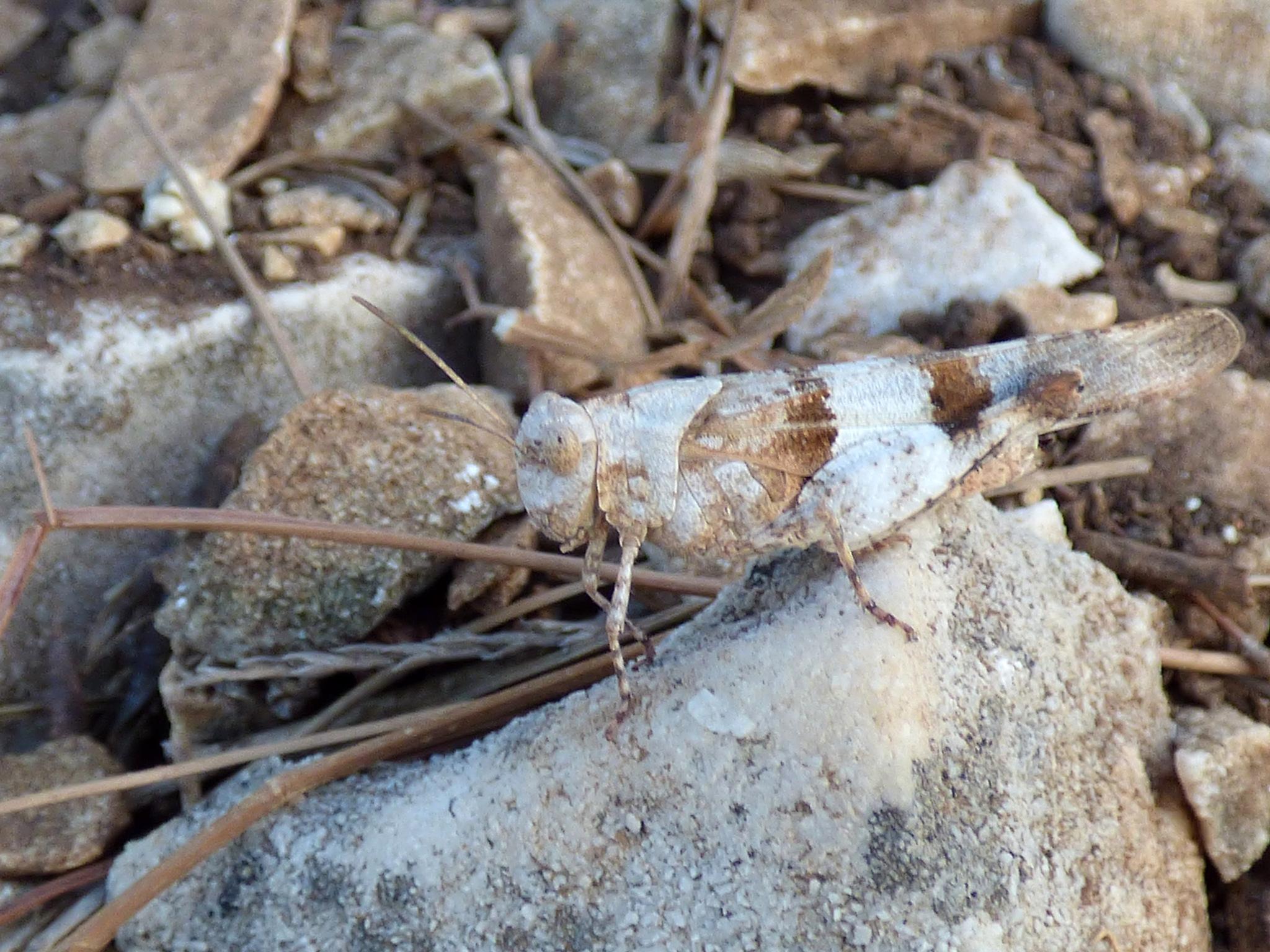 Camouflage by György Horváth