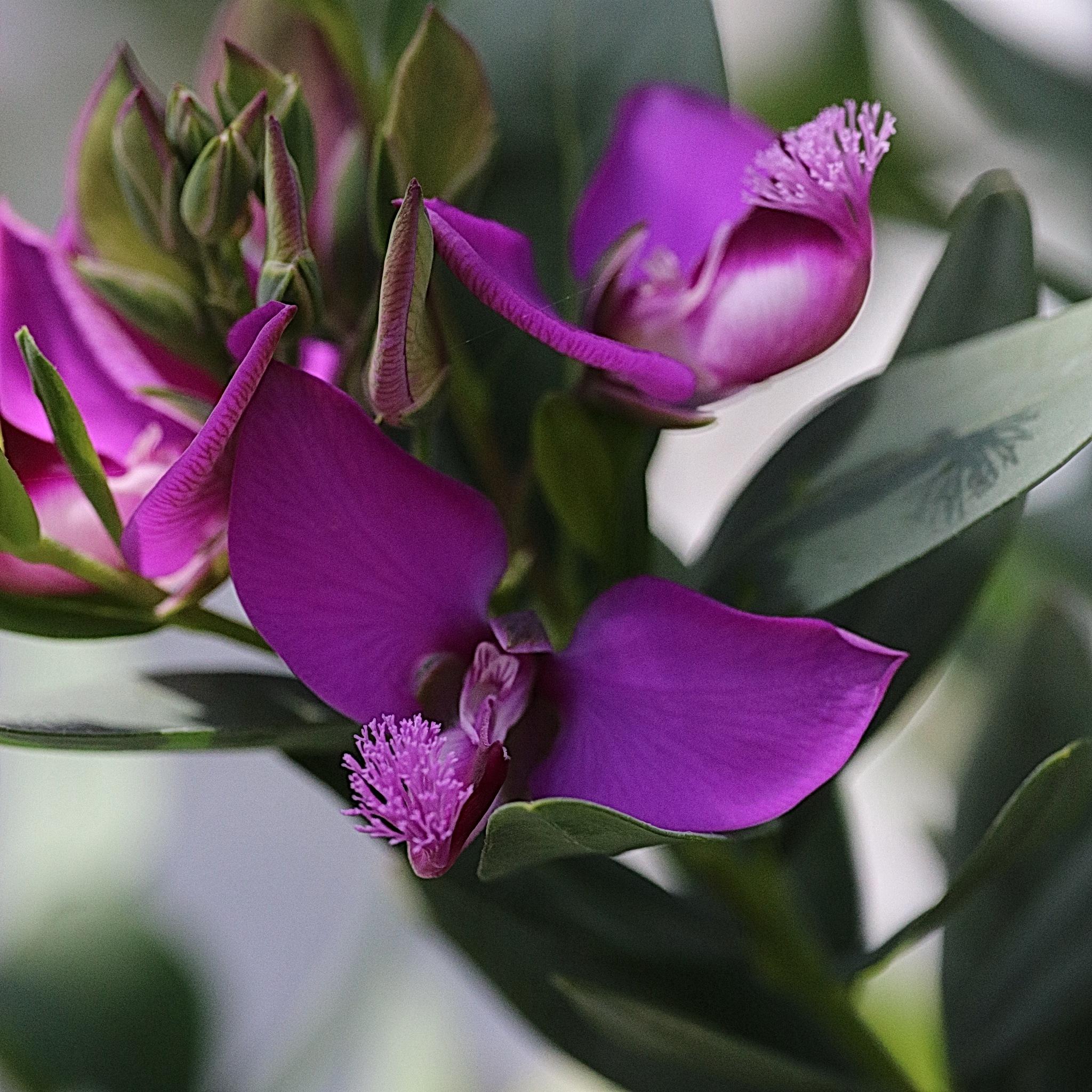 Purple Flower by Mikkel Kristiansen