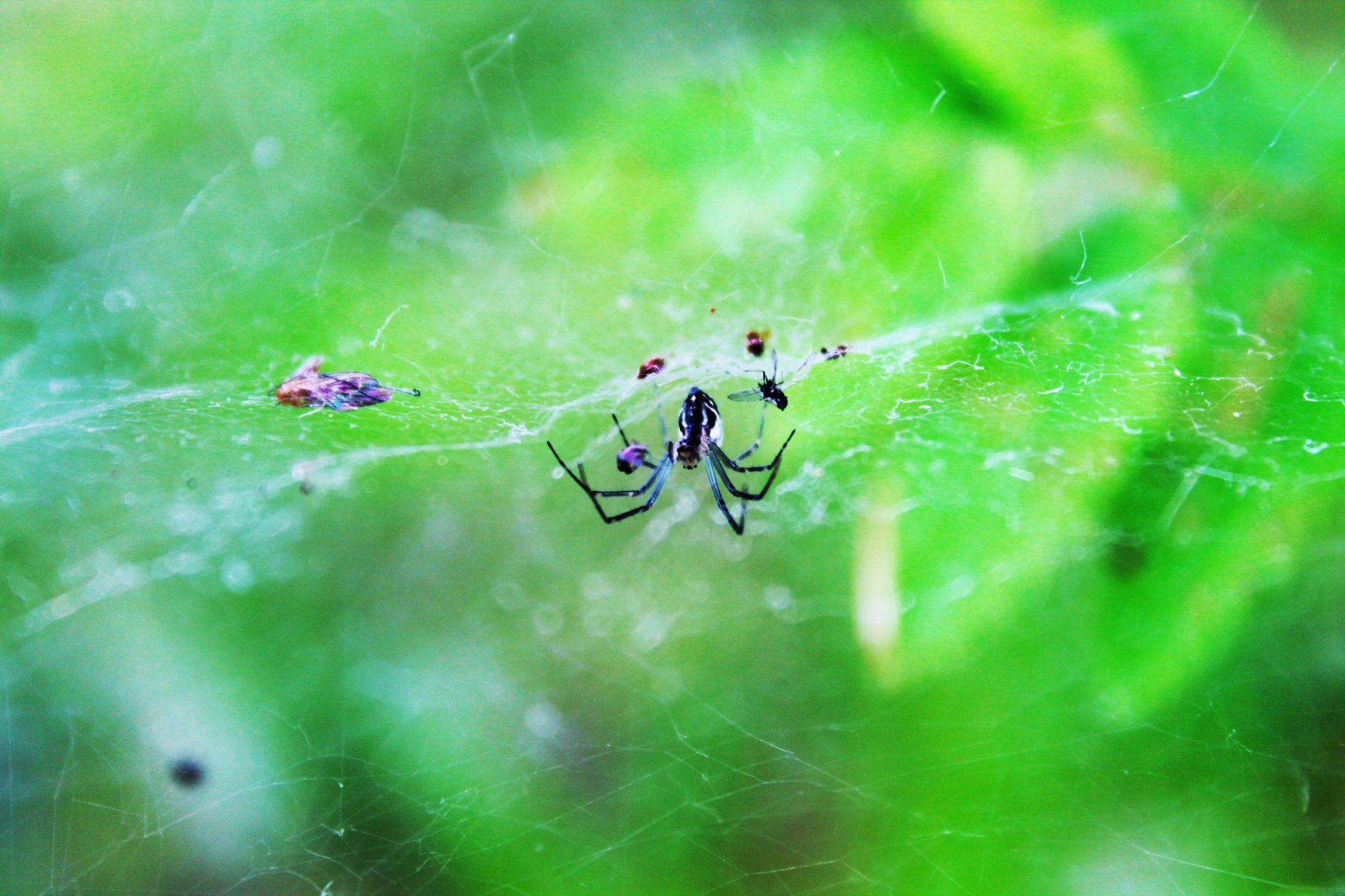 Lunch time for the spider. by Jonatan Gabalski
