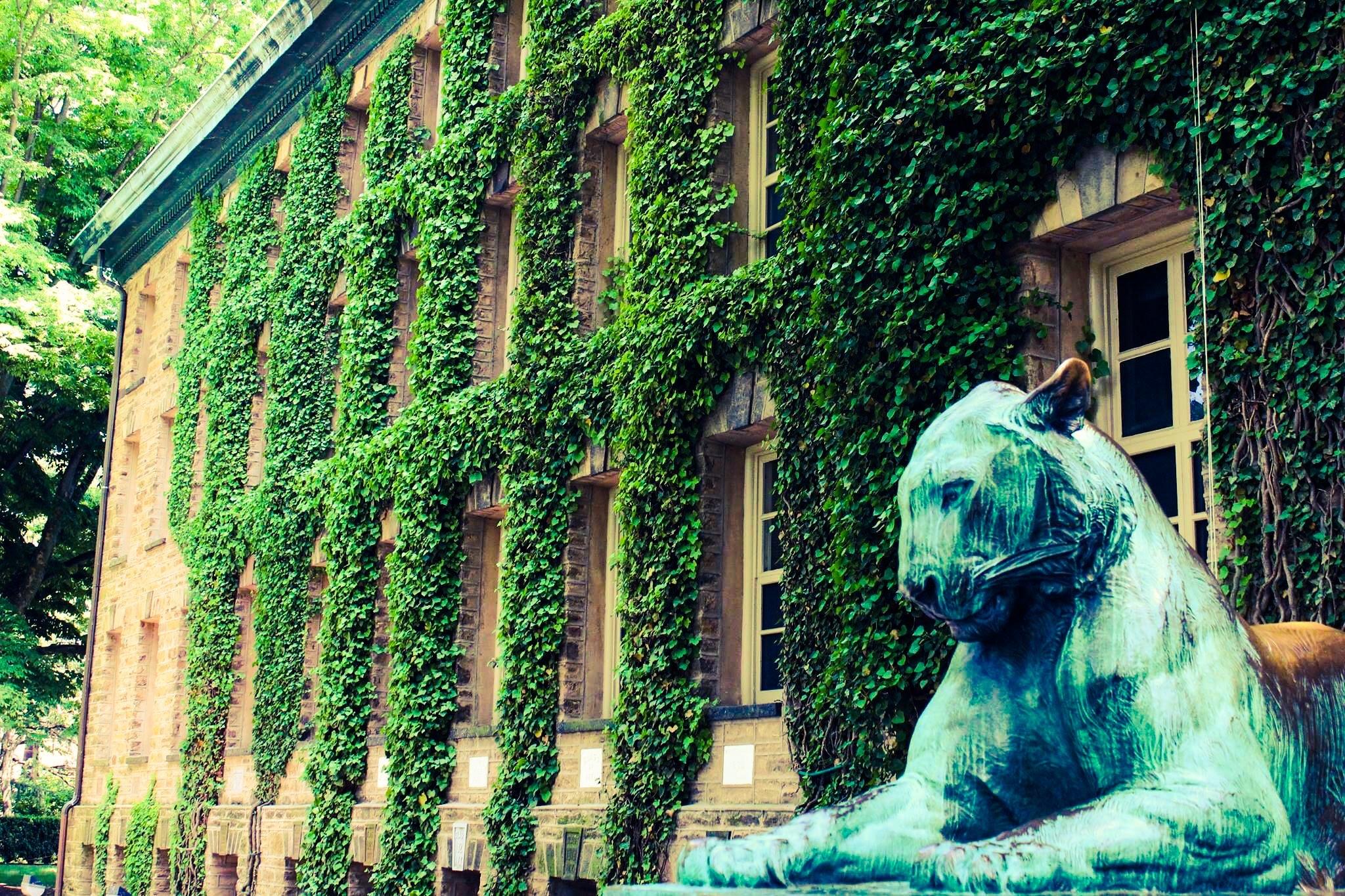 Princeton University  by Sneha Ghosh