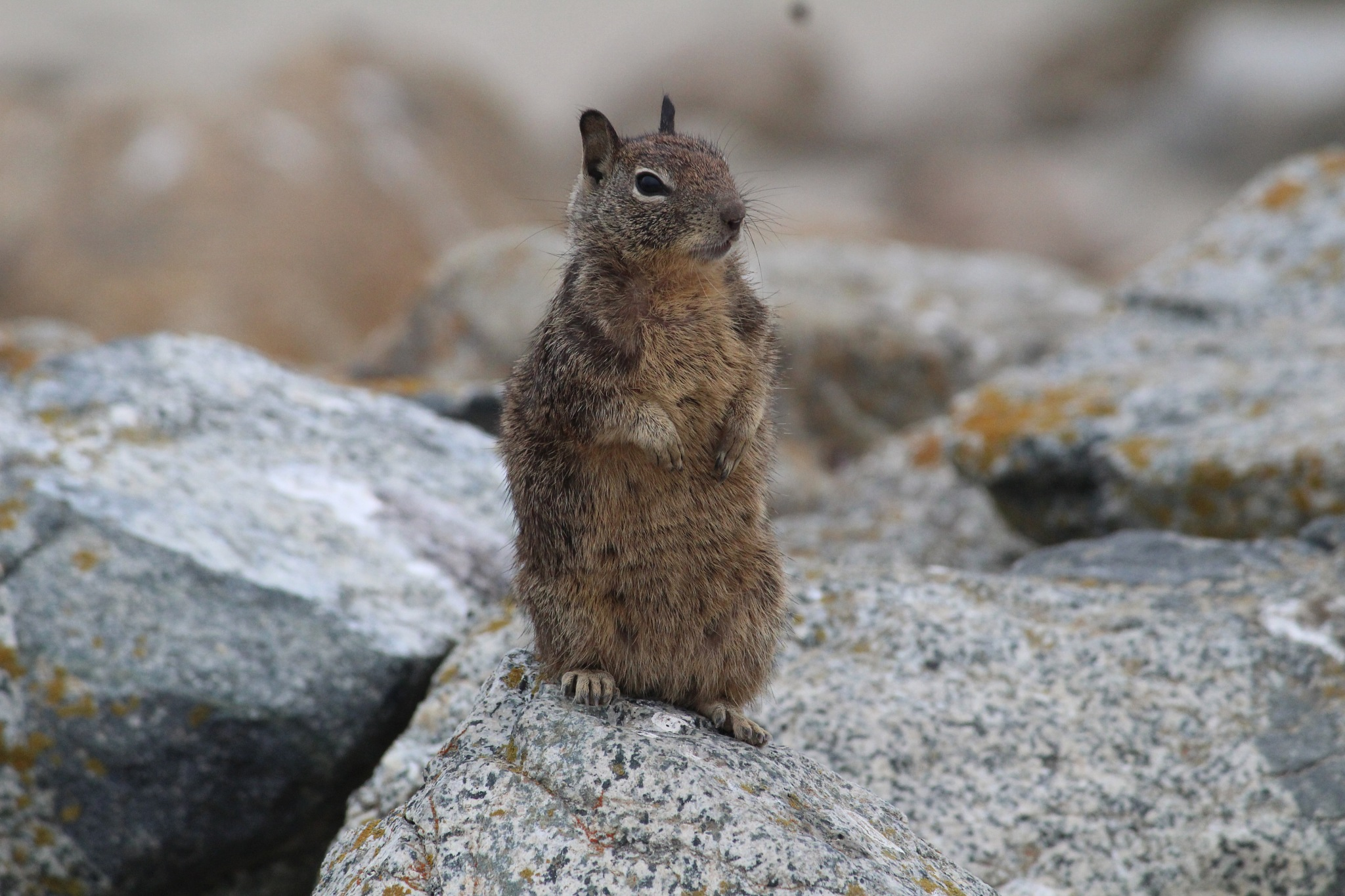 Hey from this little fellow by Sneha Ghosh