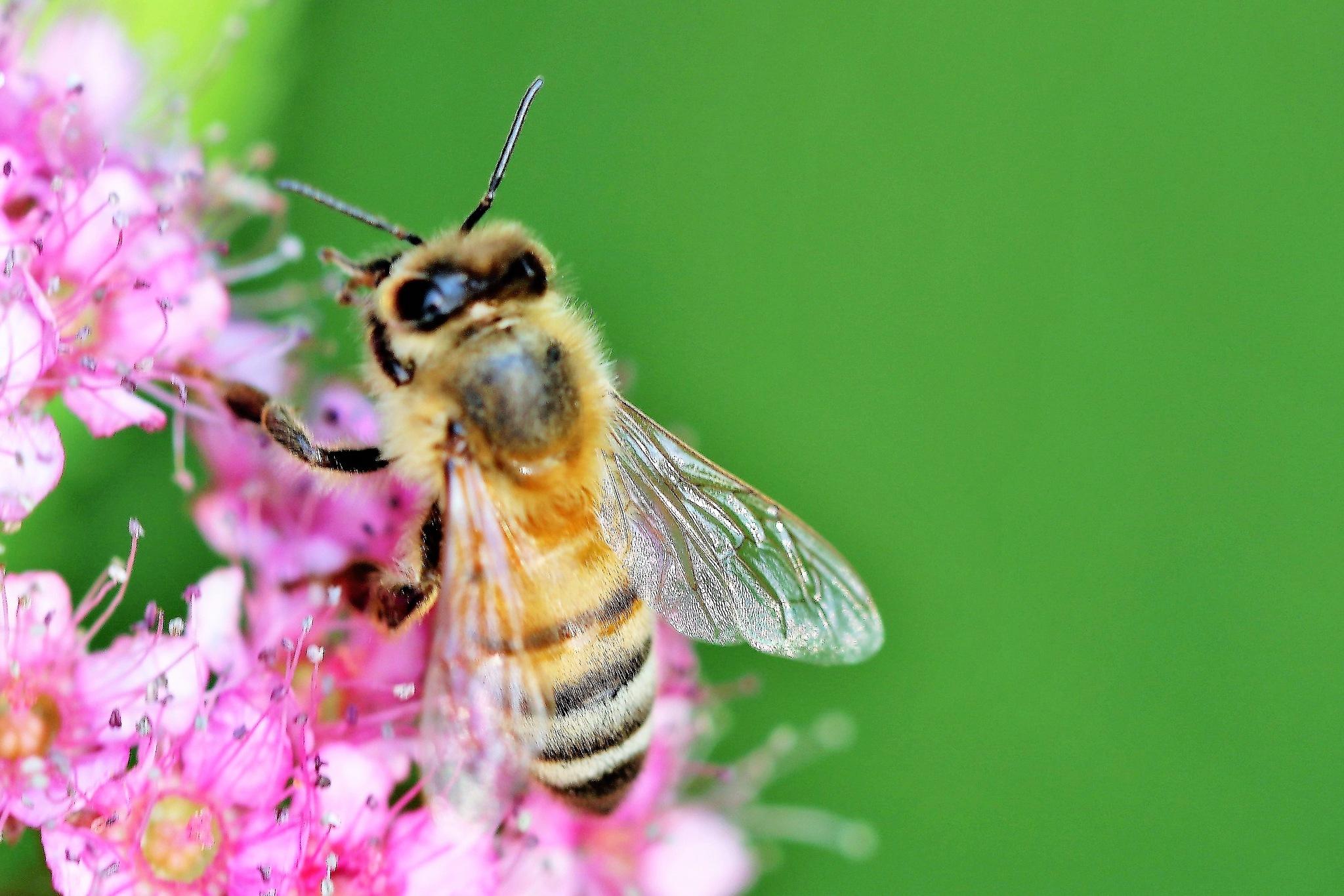 Big Bee by timothyduffus