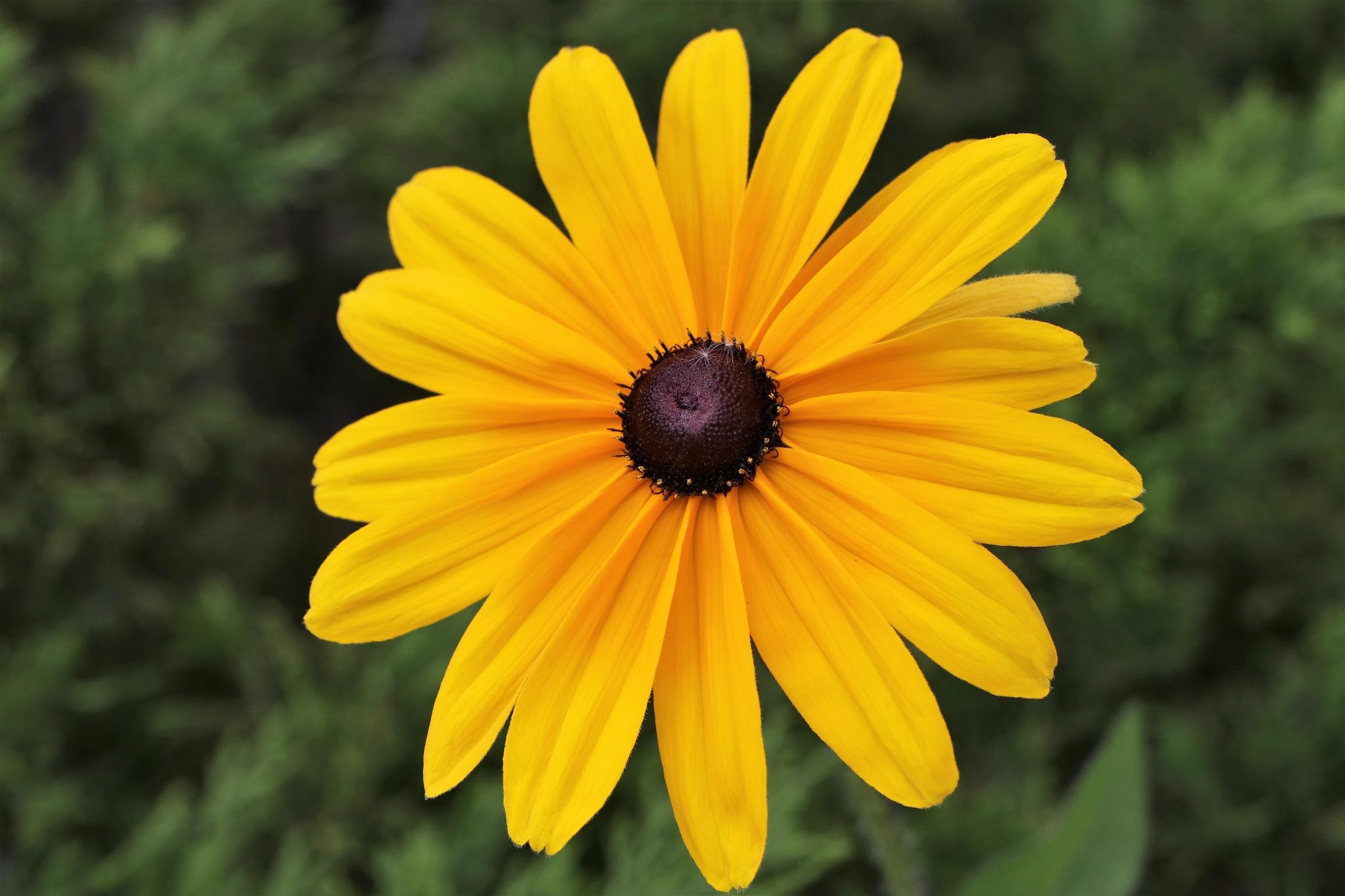 Mellow Yellow by timothyduffus