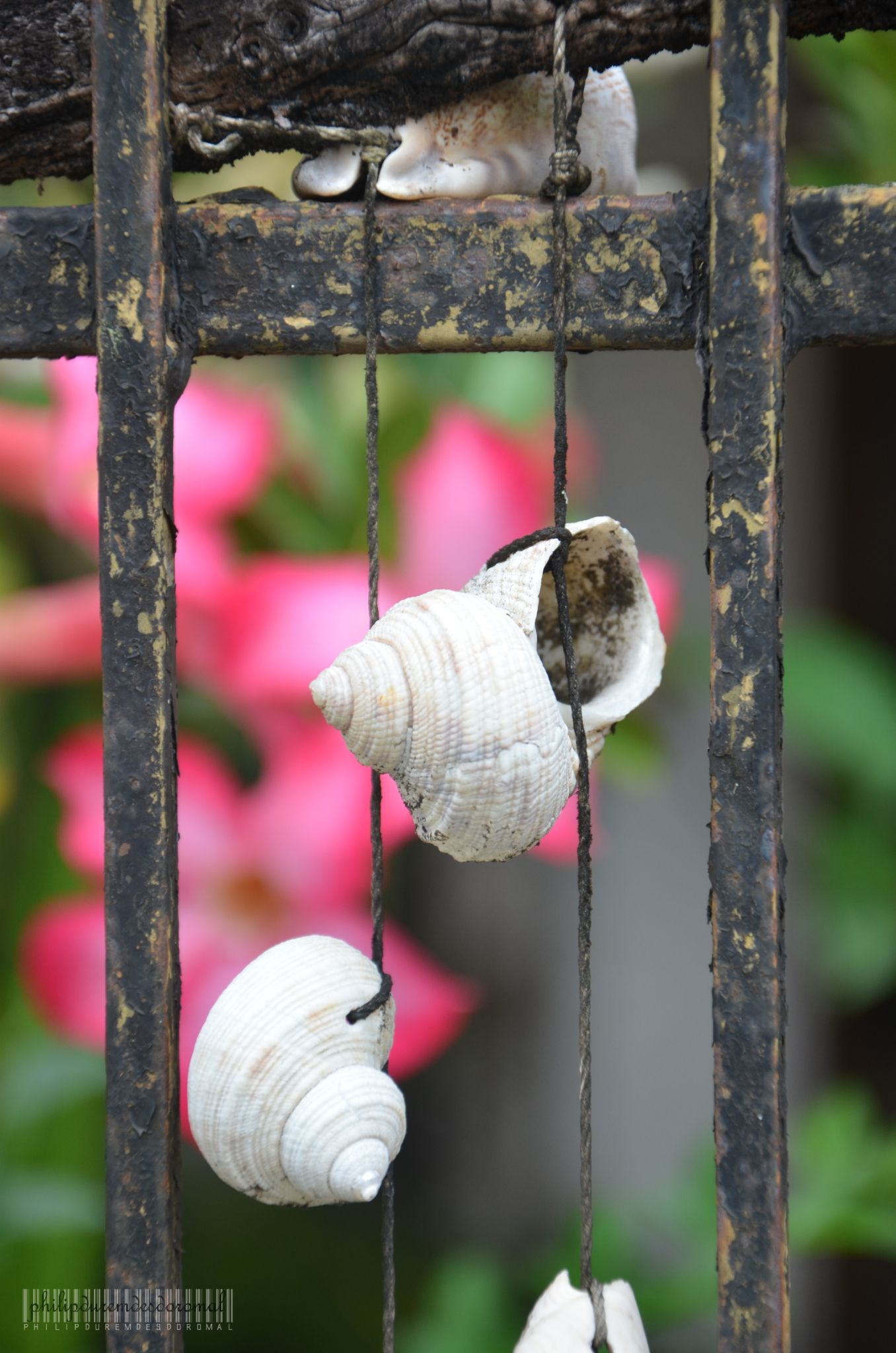Shells by Philip