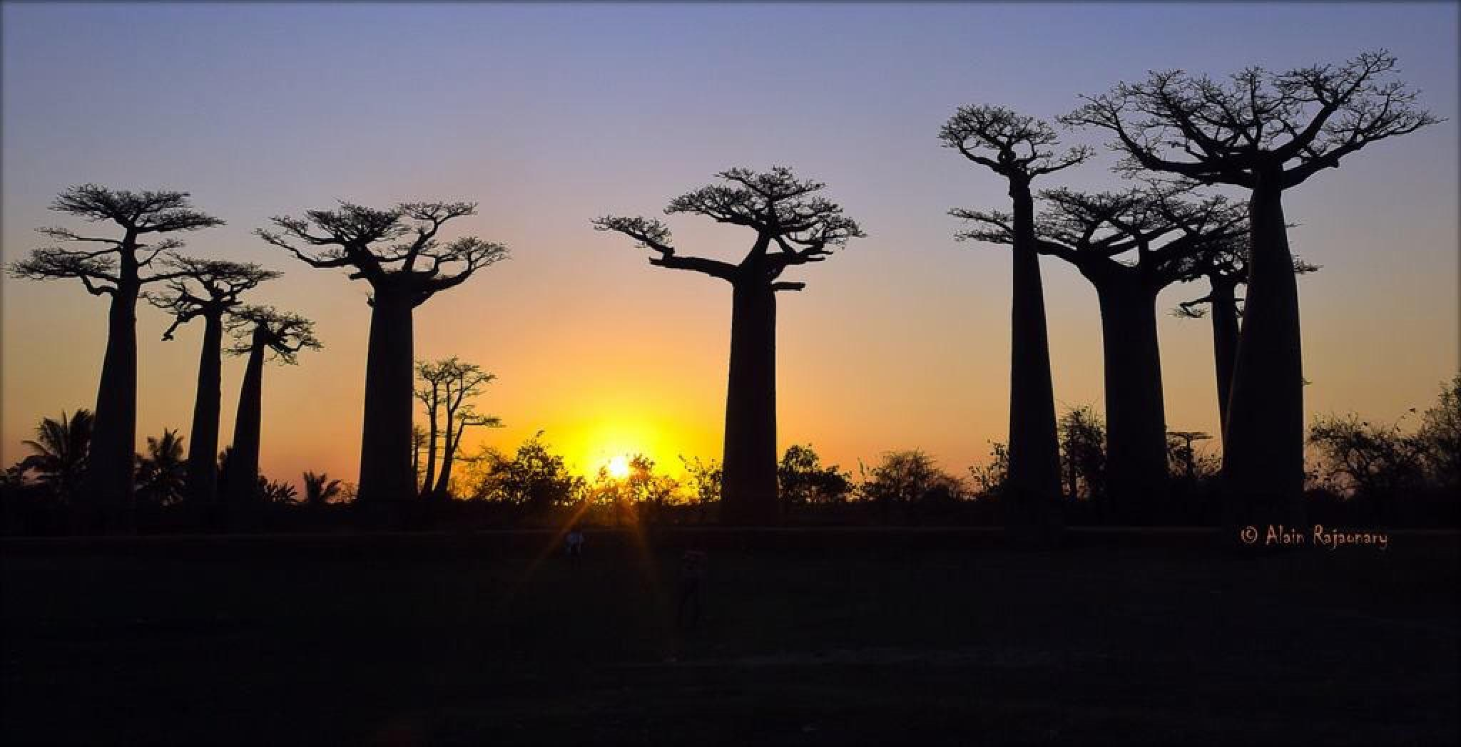 Sunset over baobabs by Rajaonary Alain