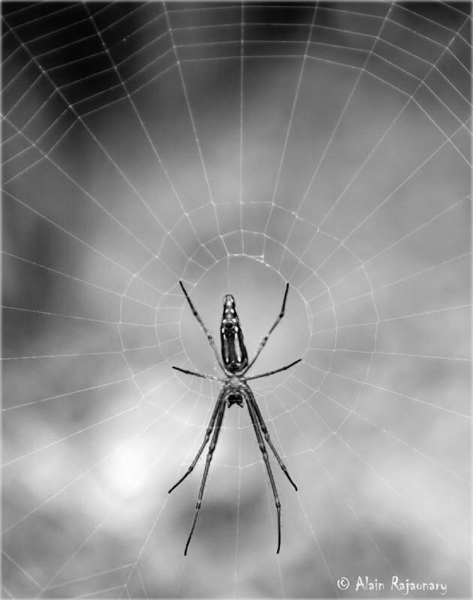 The Web by Rajaonary Alain