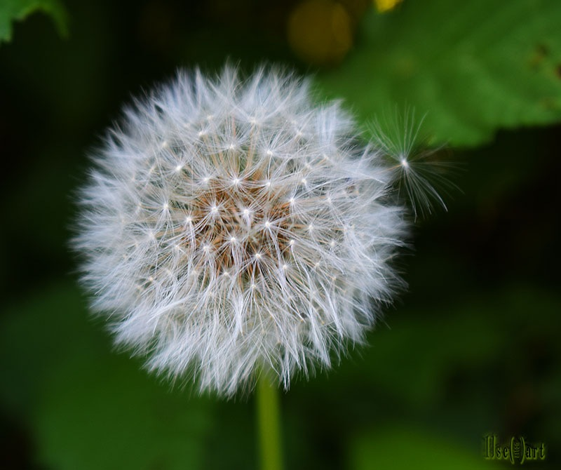 Blow ball by Ilse Peters