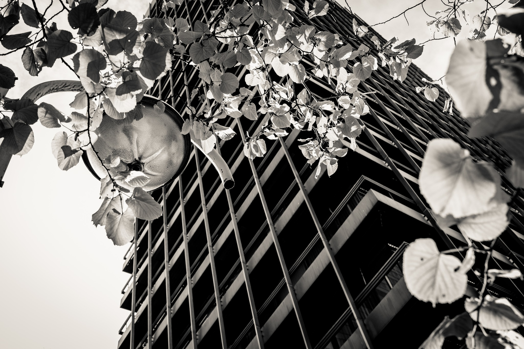 perspective of a city tree  by Stefan Lauterbach