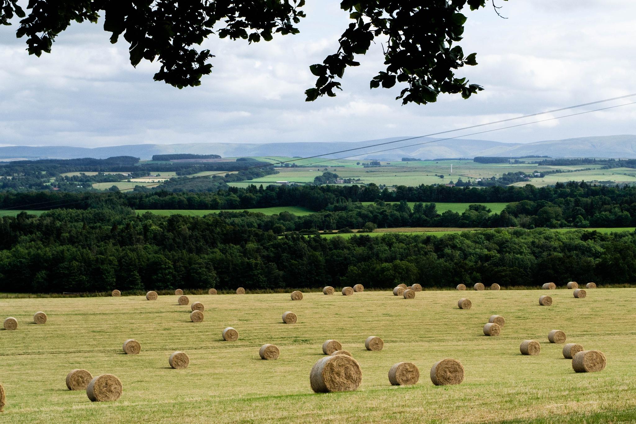 fields by Patricia Brehmer