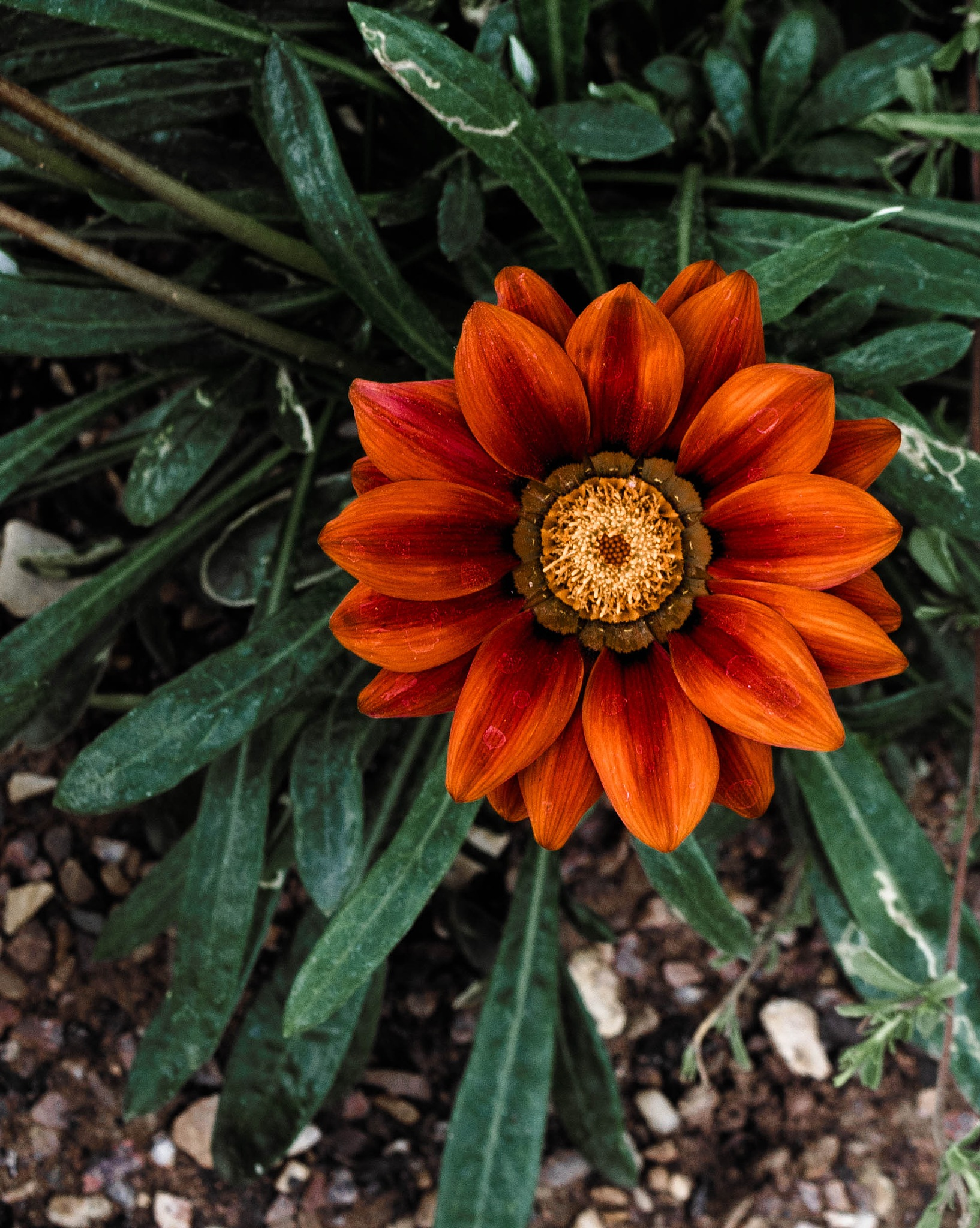 'sunset' flower by Patricia Brehmer