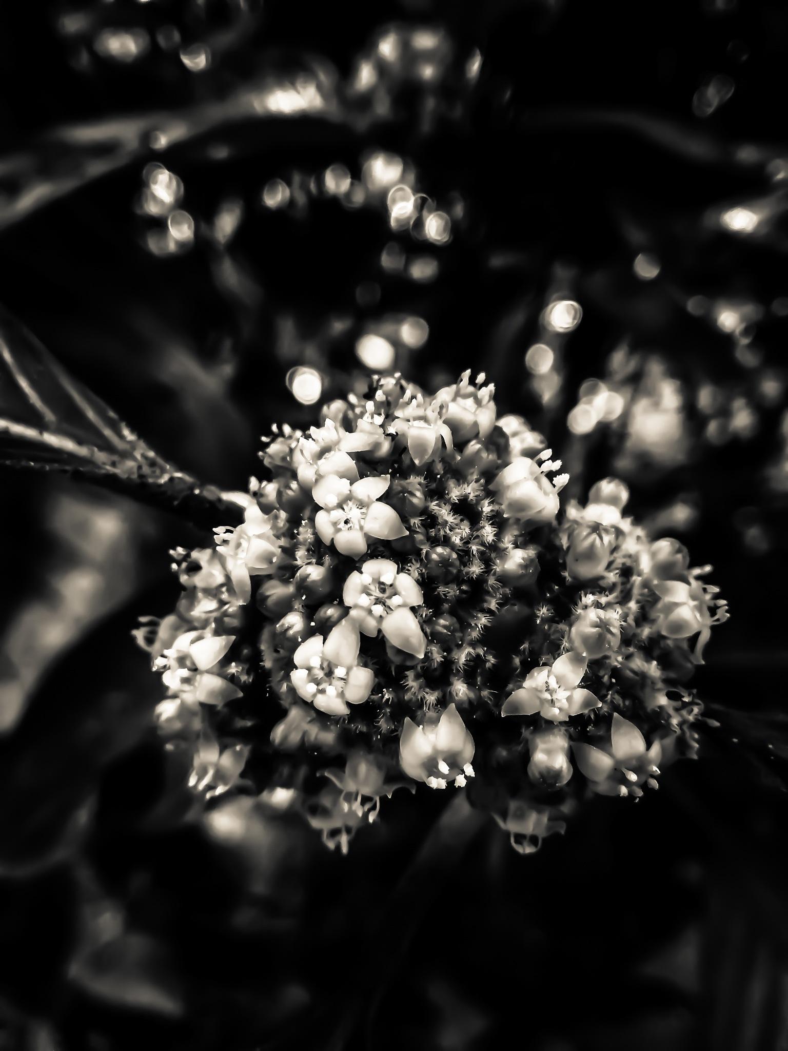 Creamy-Black by HaqPhotoscape