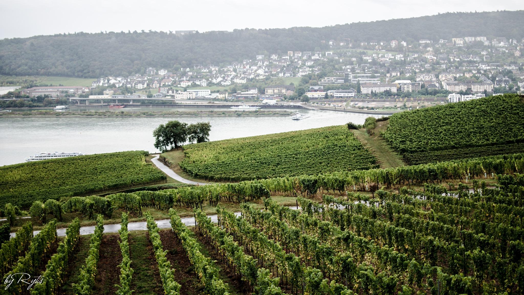 Rüdesheim am Rhein by rytiss50