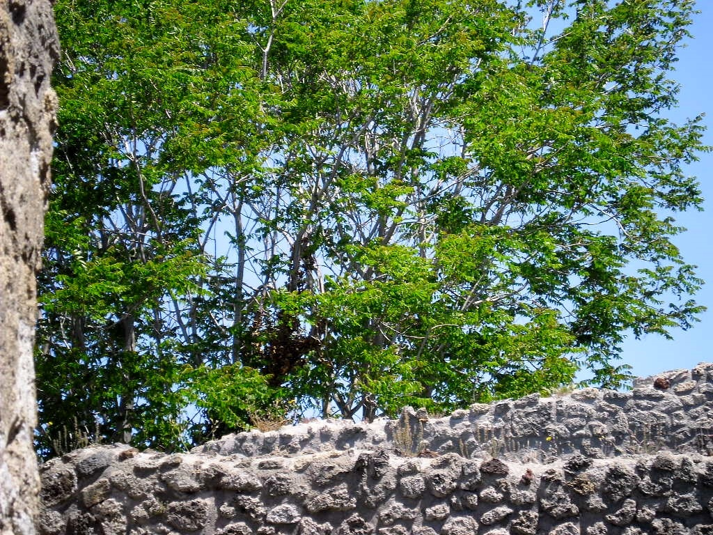 verde pompeiano by stefano armellin