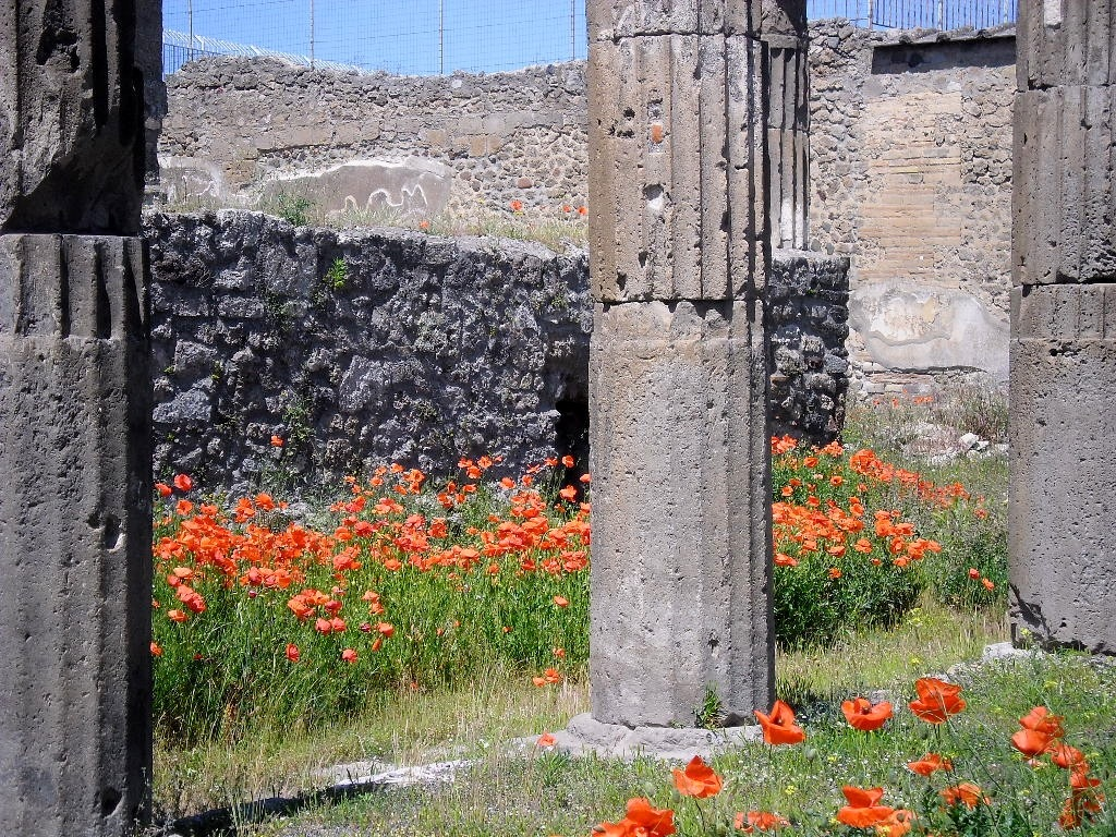 papaveri e colonne by stefano armellin