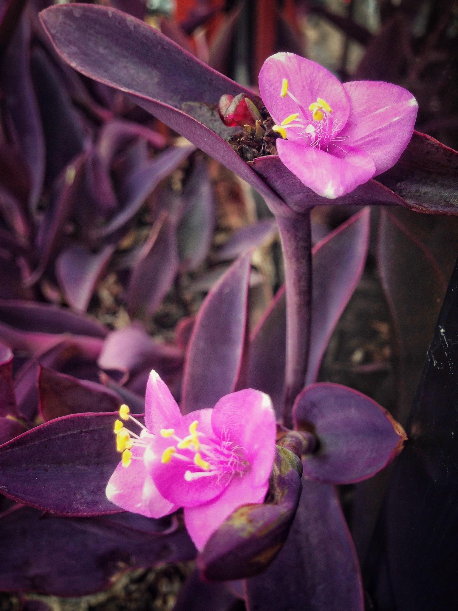 Unas hermosas flores diminutas en casa de la cuñada by masterjosias