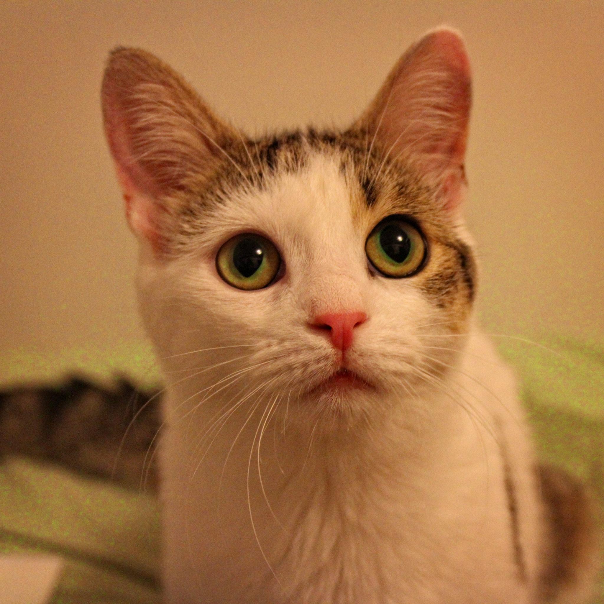 kitty by spiritualwakeofficial