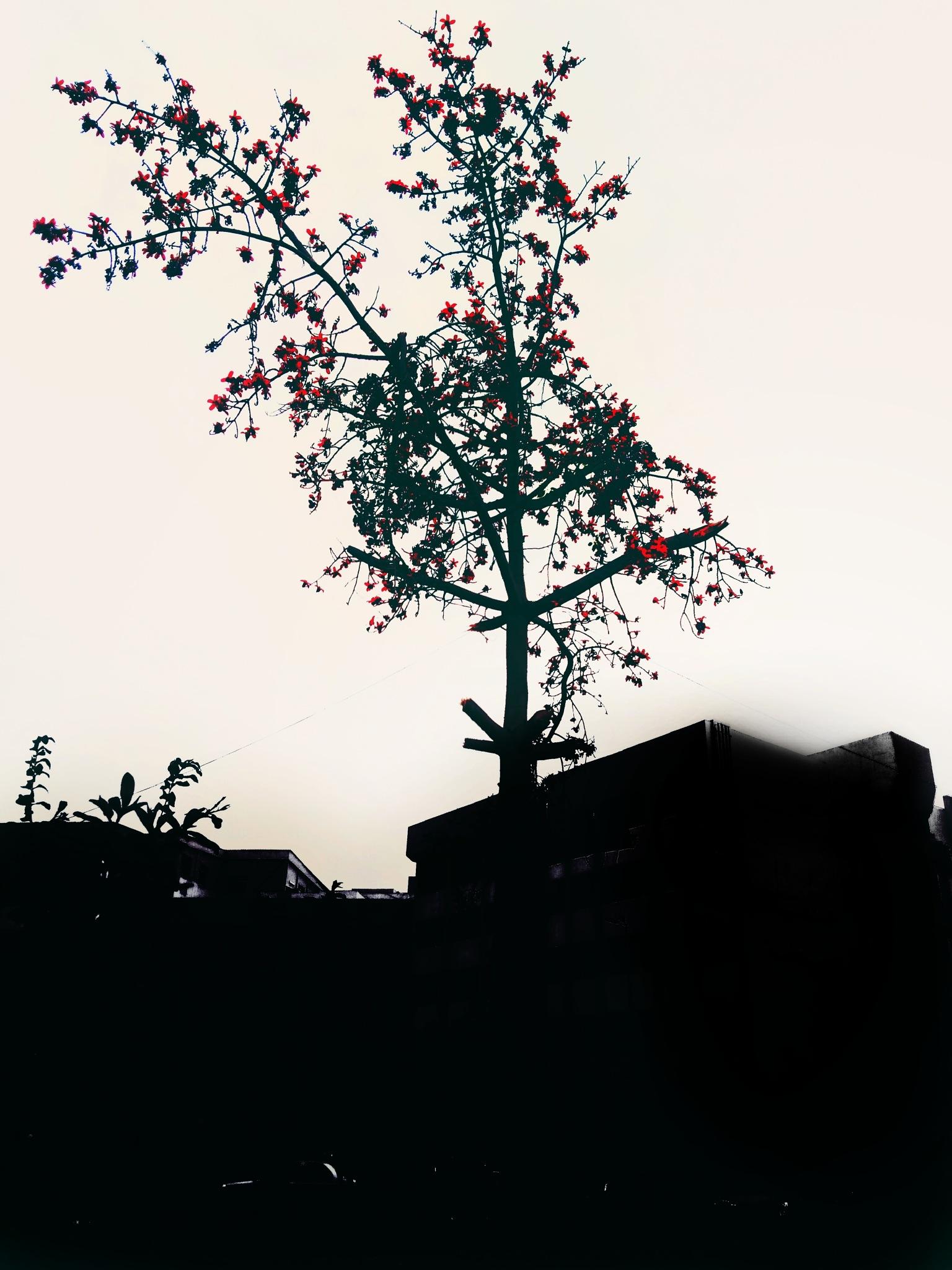 BEAUTY  by Kareem Yosri